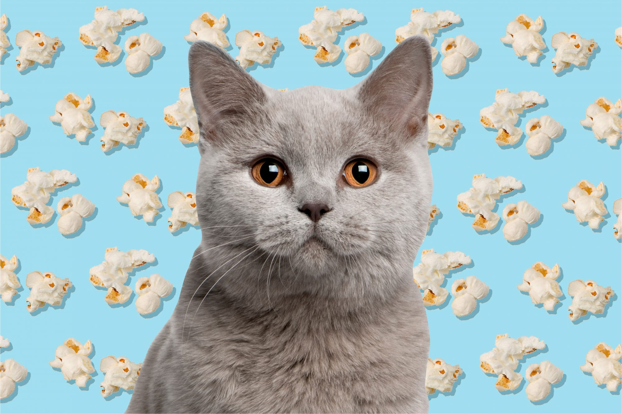 Photo of grey cat with illustrated popcorn background