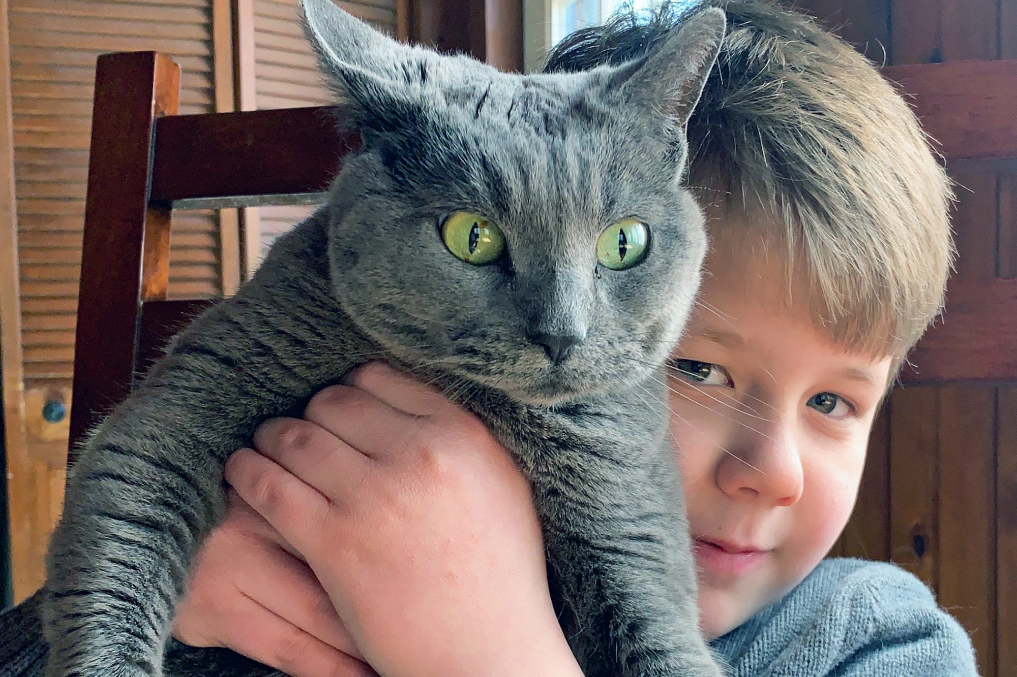 Nigel of I've Pet that Cat holds chunky grey cat