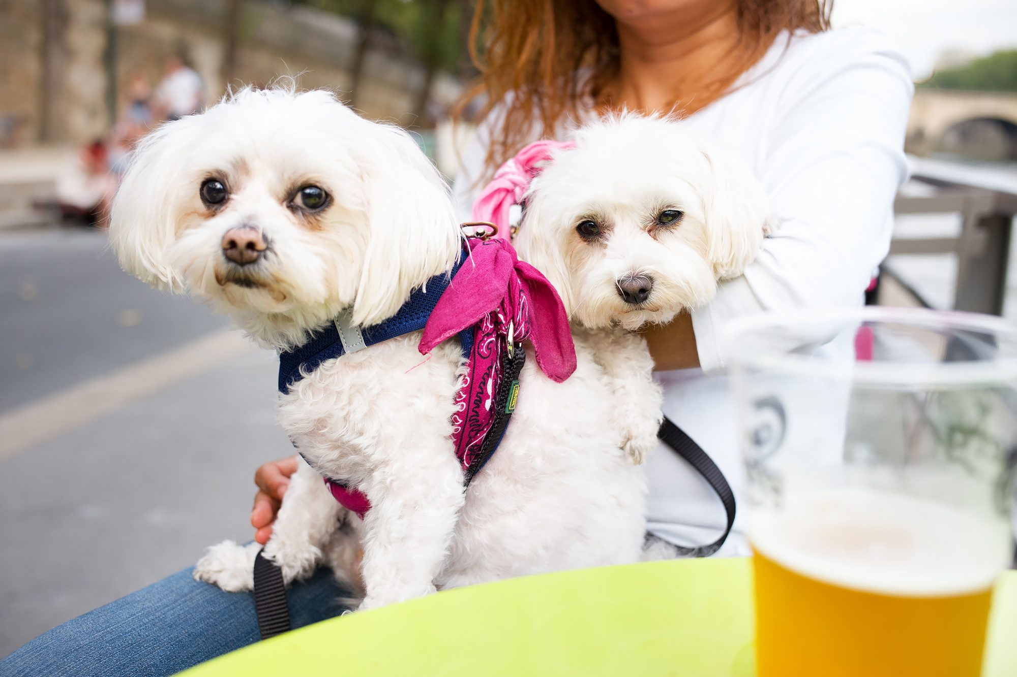 Woman sits with two dogs on her lap at a cafe