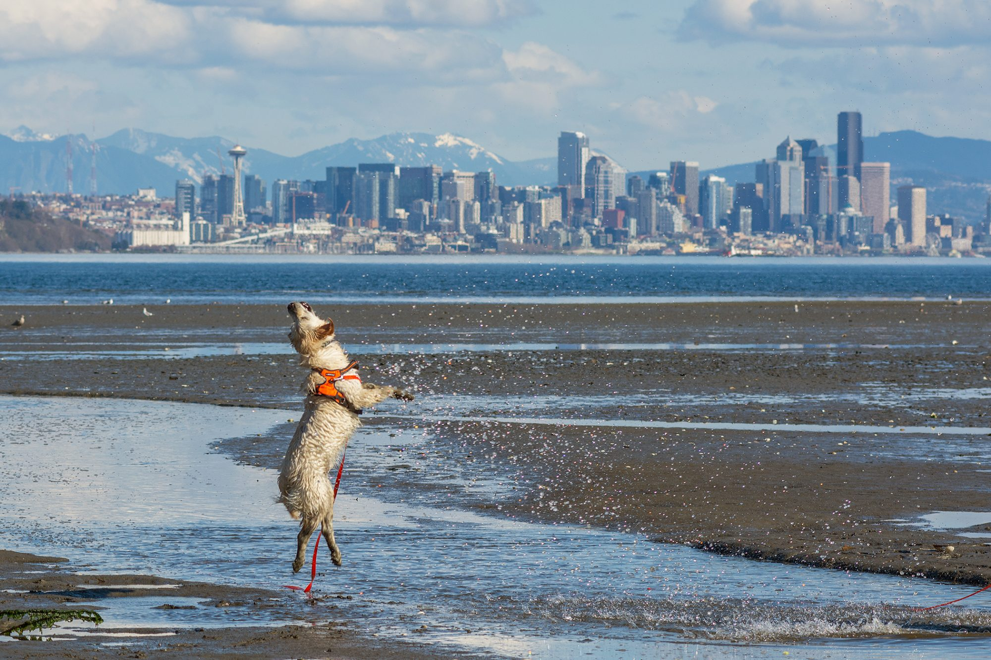 Dog on beach with Seattle skyline in the background