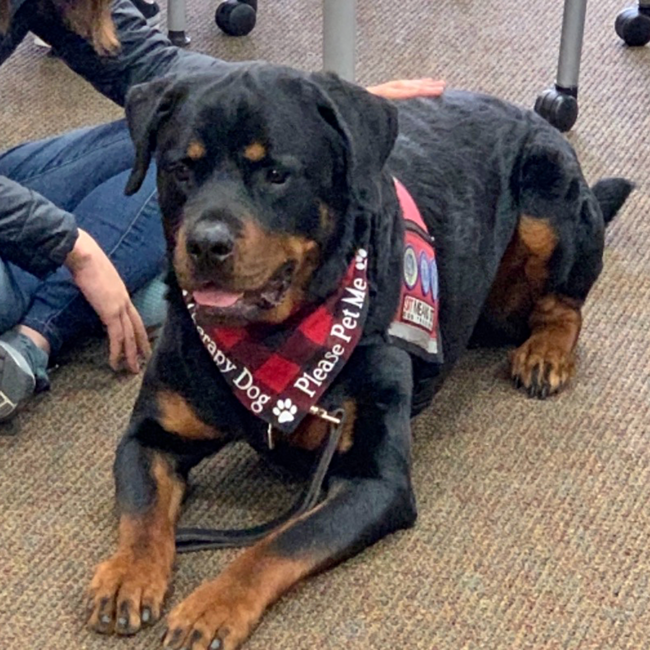 Max, the therapy dog, wearing a pet-me bandana