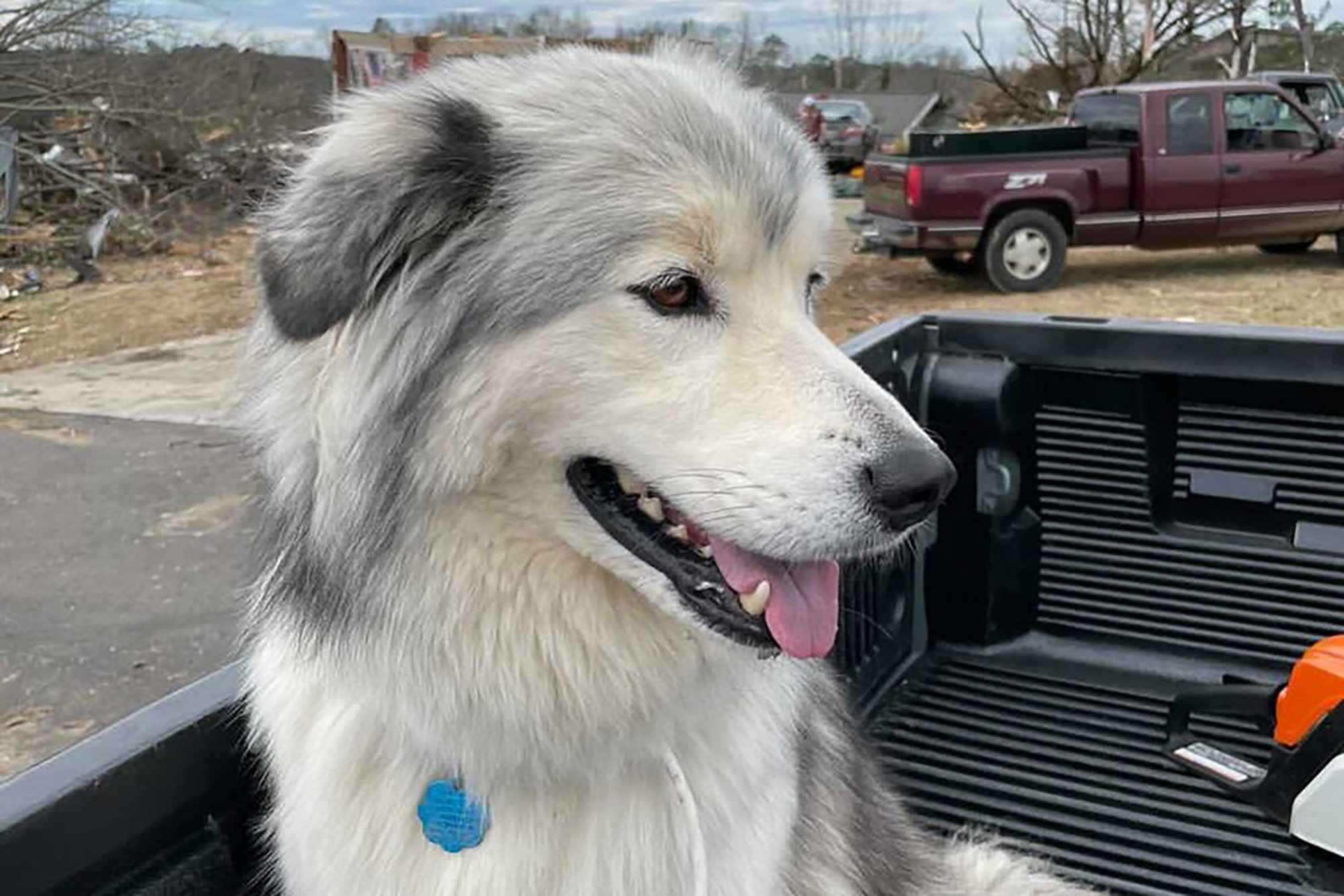 dog rescued after tornado