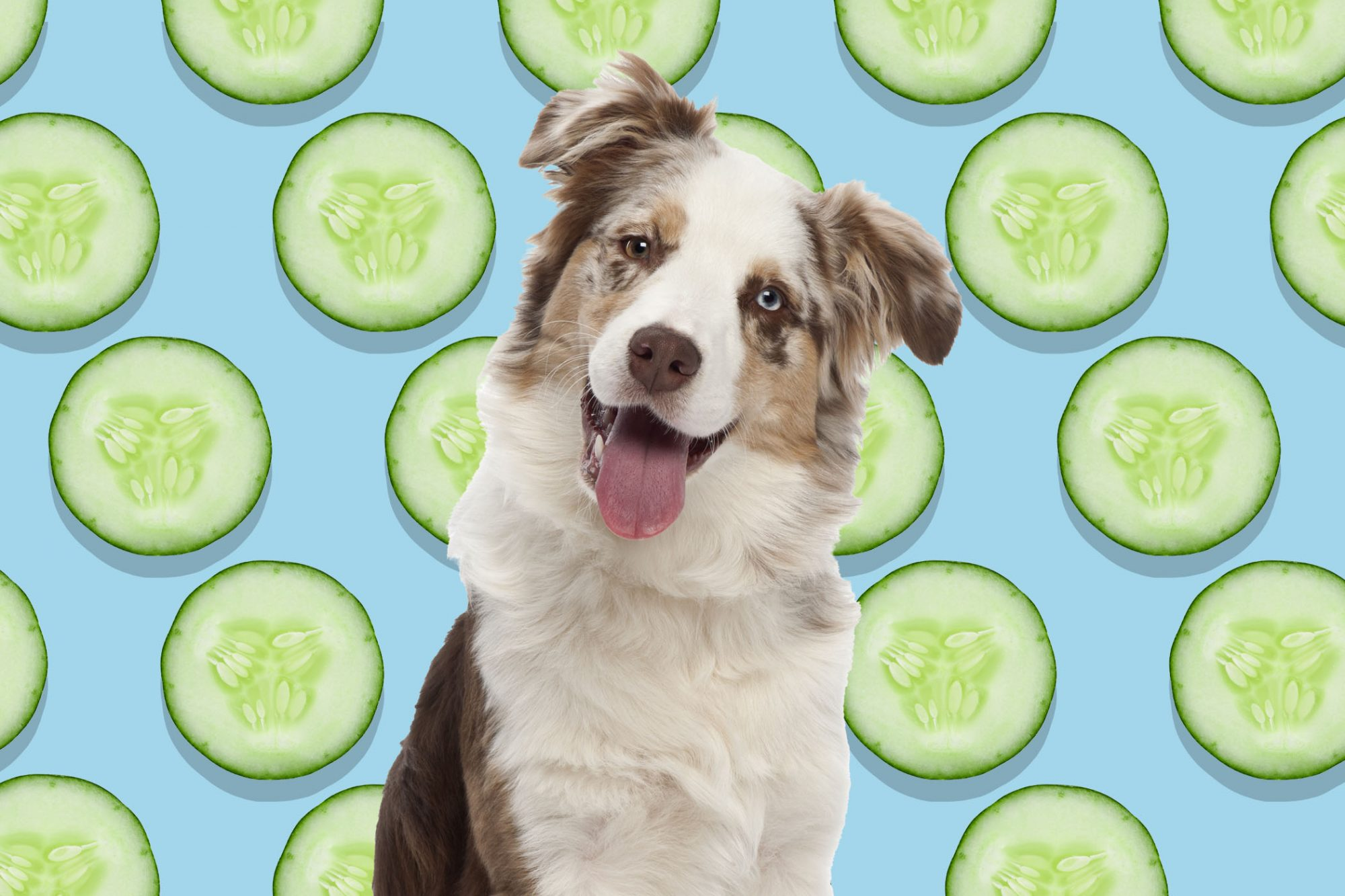 Portrait of dog in front of cucumbers background illustration