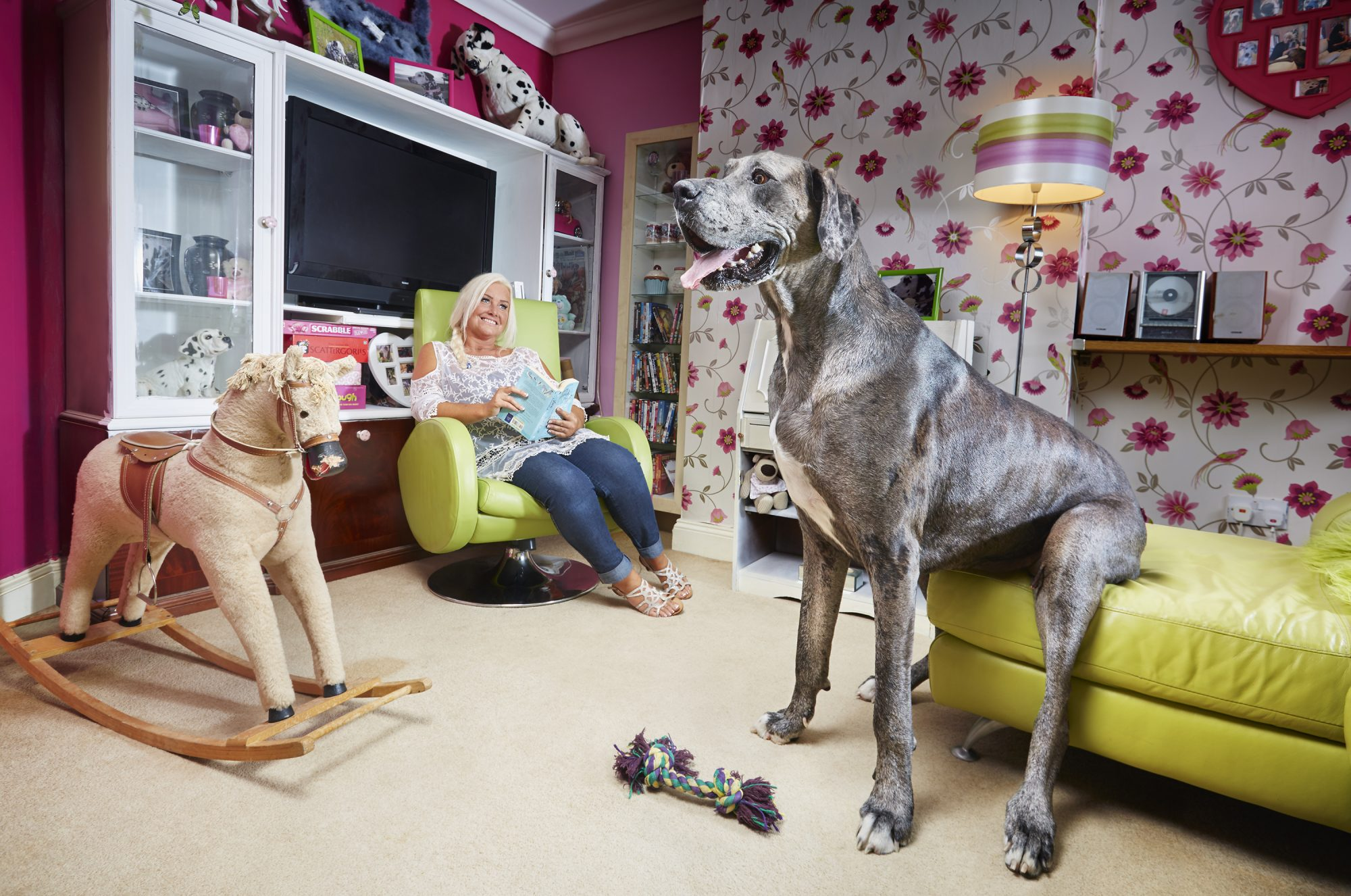 great dane sits on couch in living room