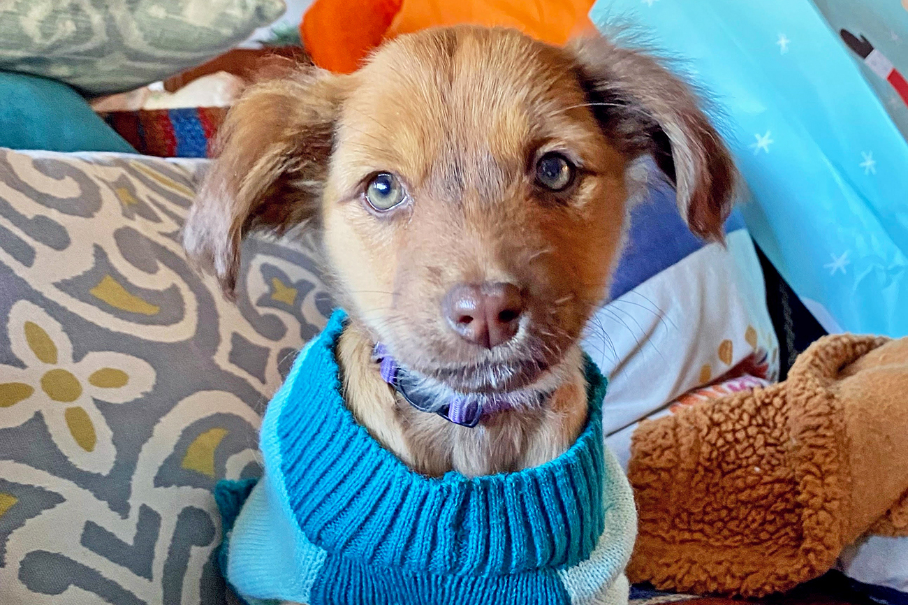 Hero photo of blonde puppy in blue sweater