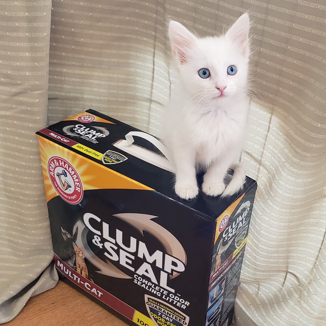 White cat sits on top of litter box