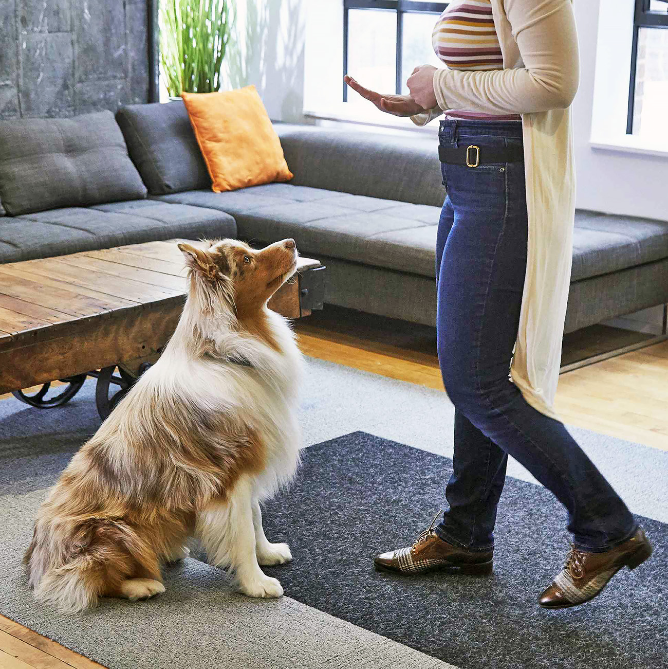 Owner signals stay to sitting dog