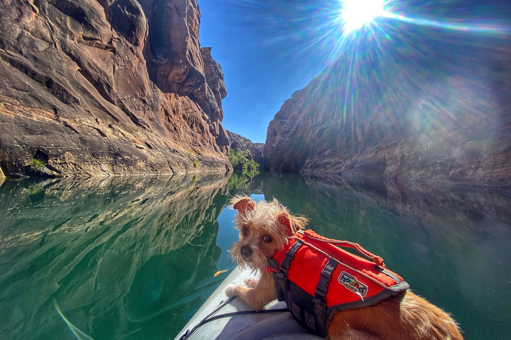 Dog in life jacket lays on end of canoe while coasting down river