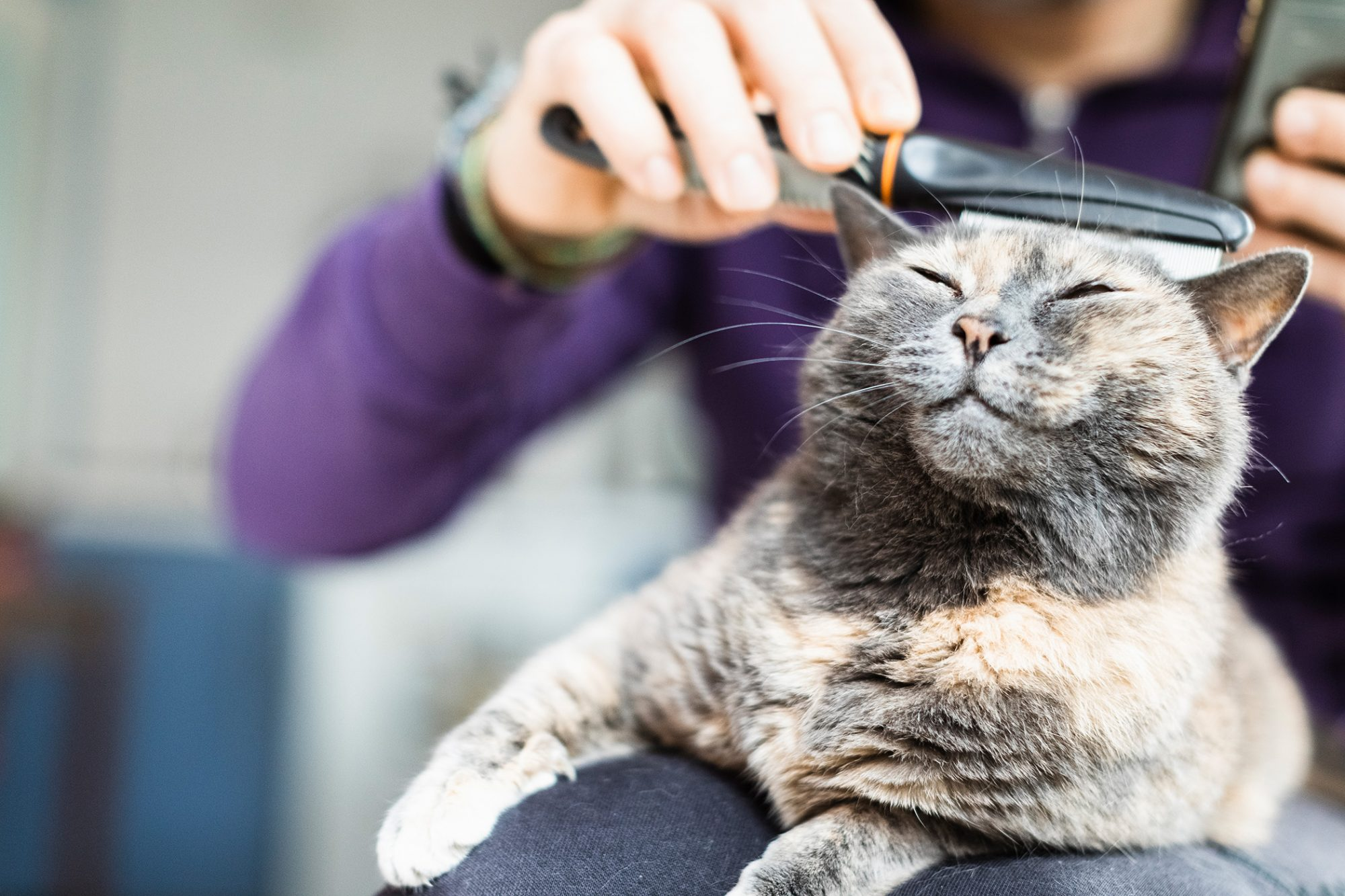 man brushing catdeimagine / Getty
