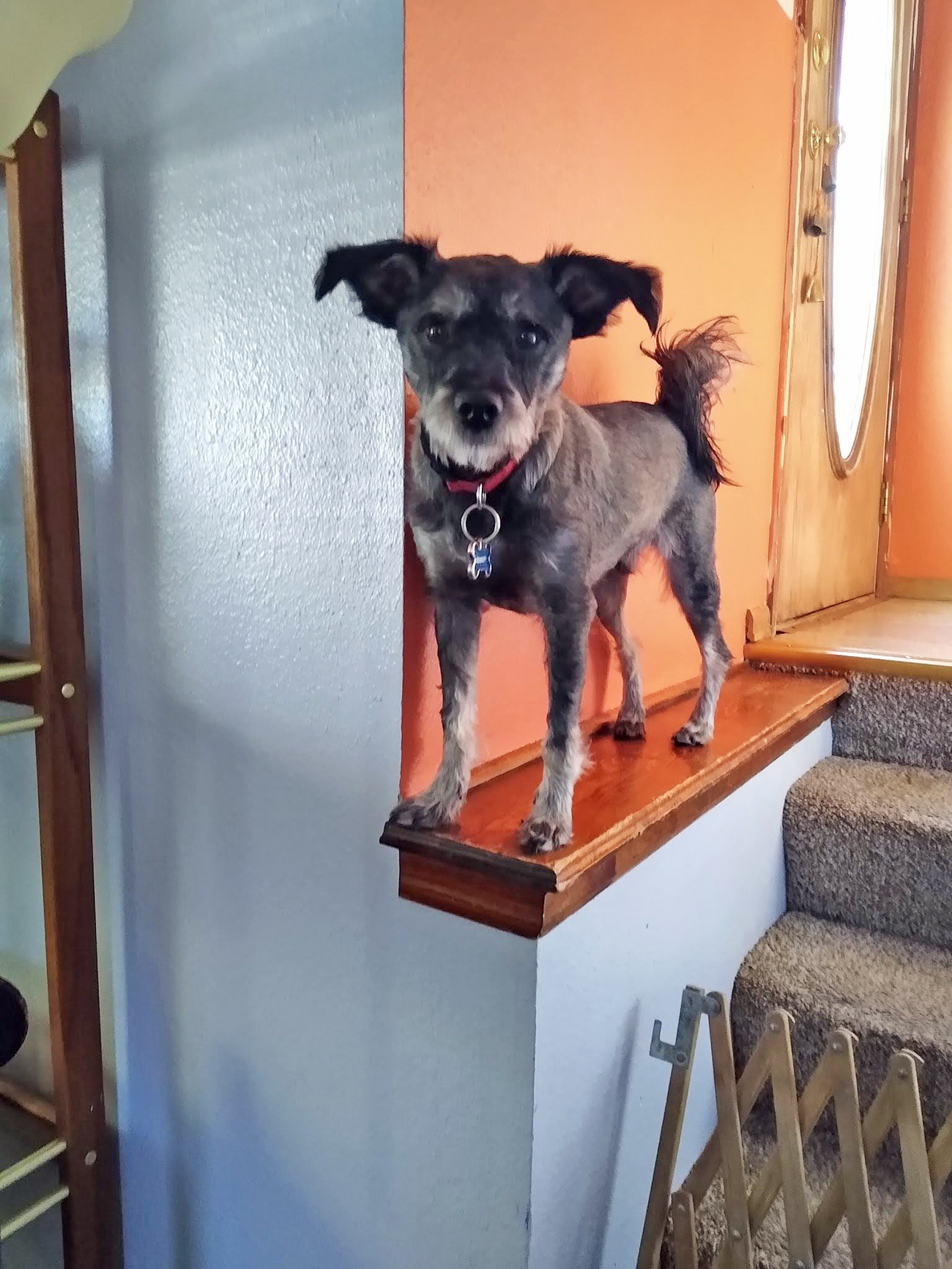 Terrier stands on stair ledge
