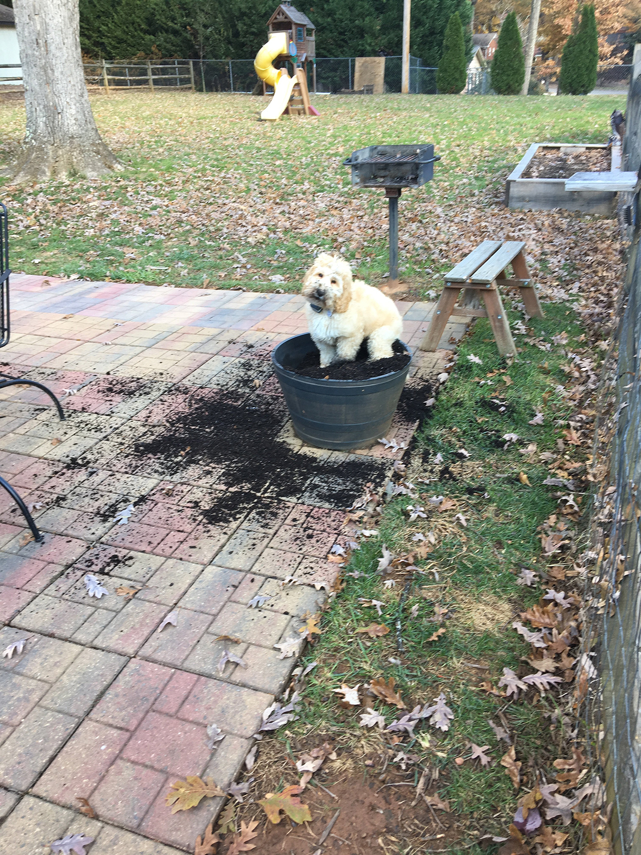White dog sits on top of potted dirt