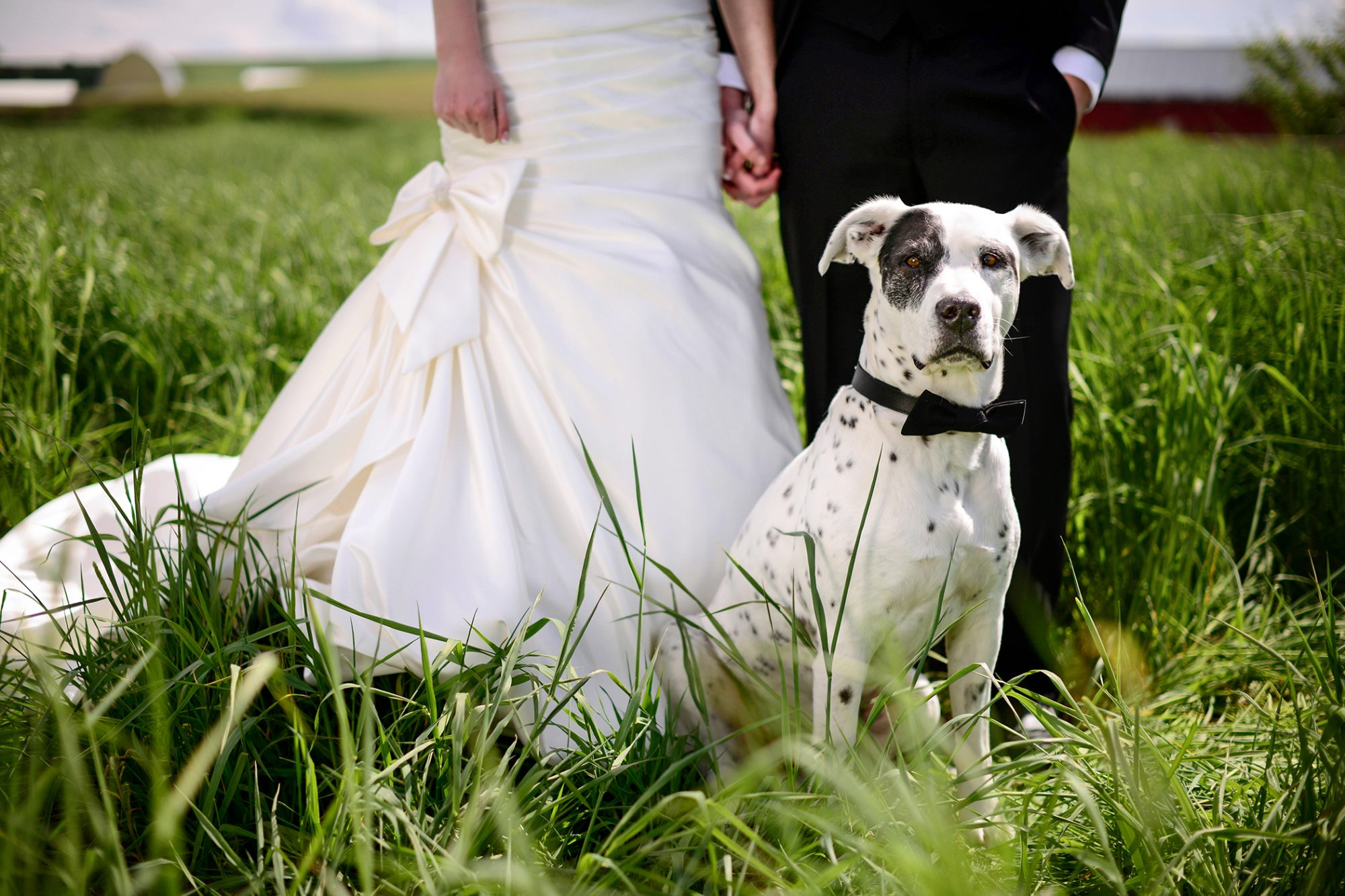 Spotted white and black dog sits at feet of bride and groom