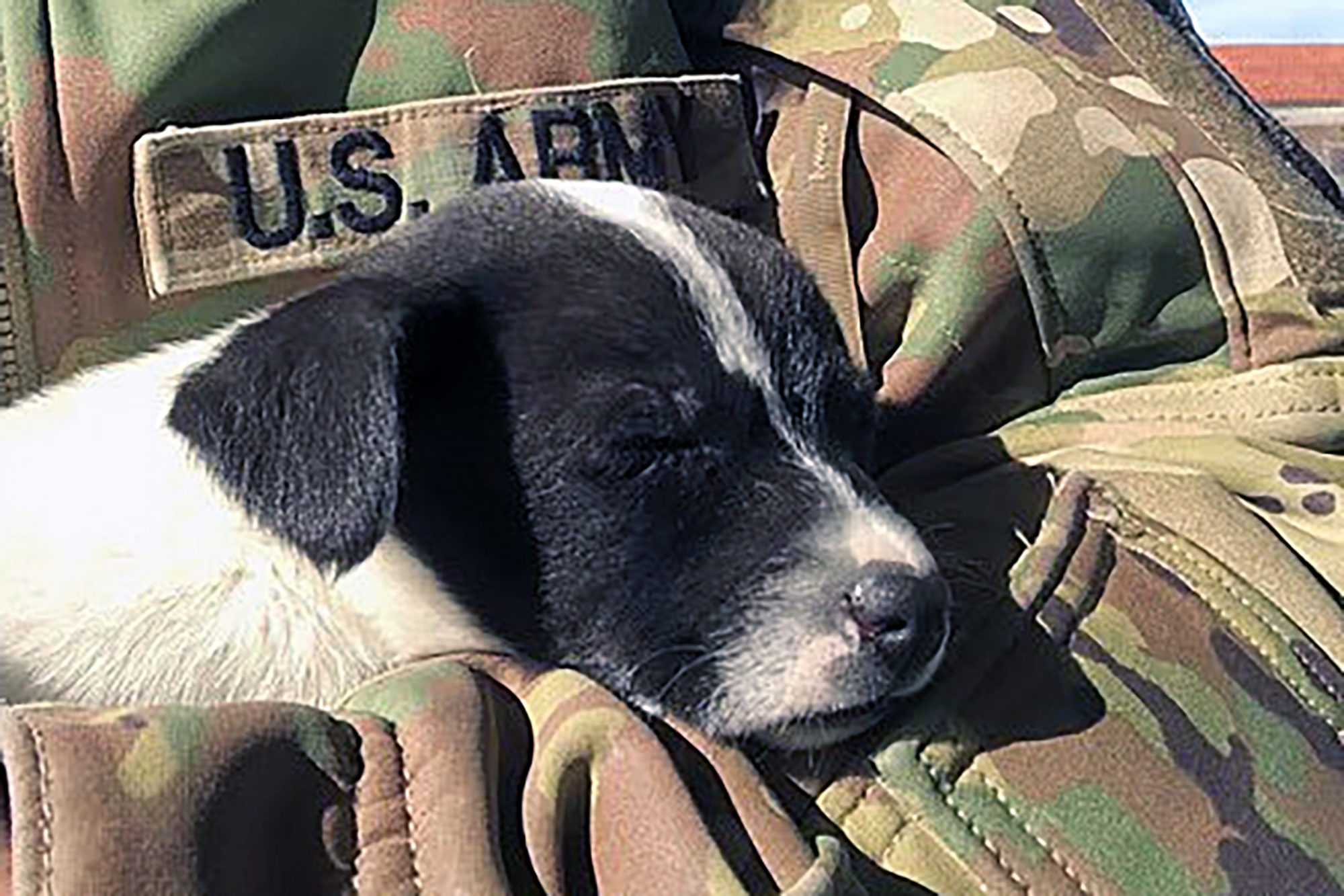 black and white puppy sleeps in soldier's arms