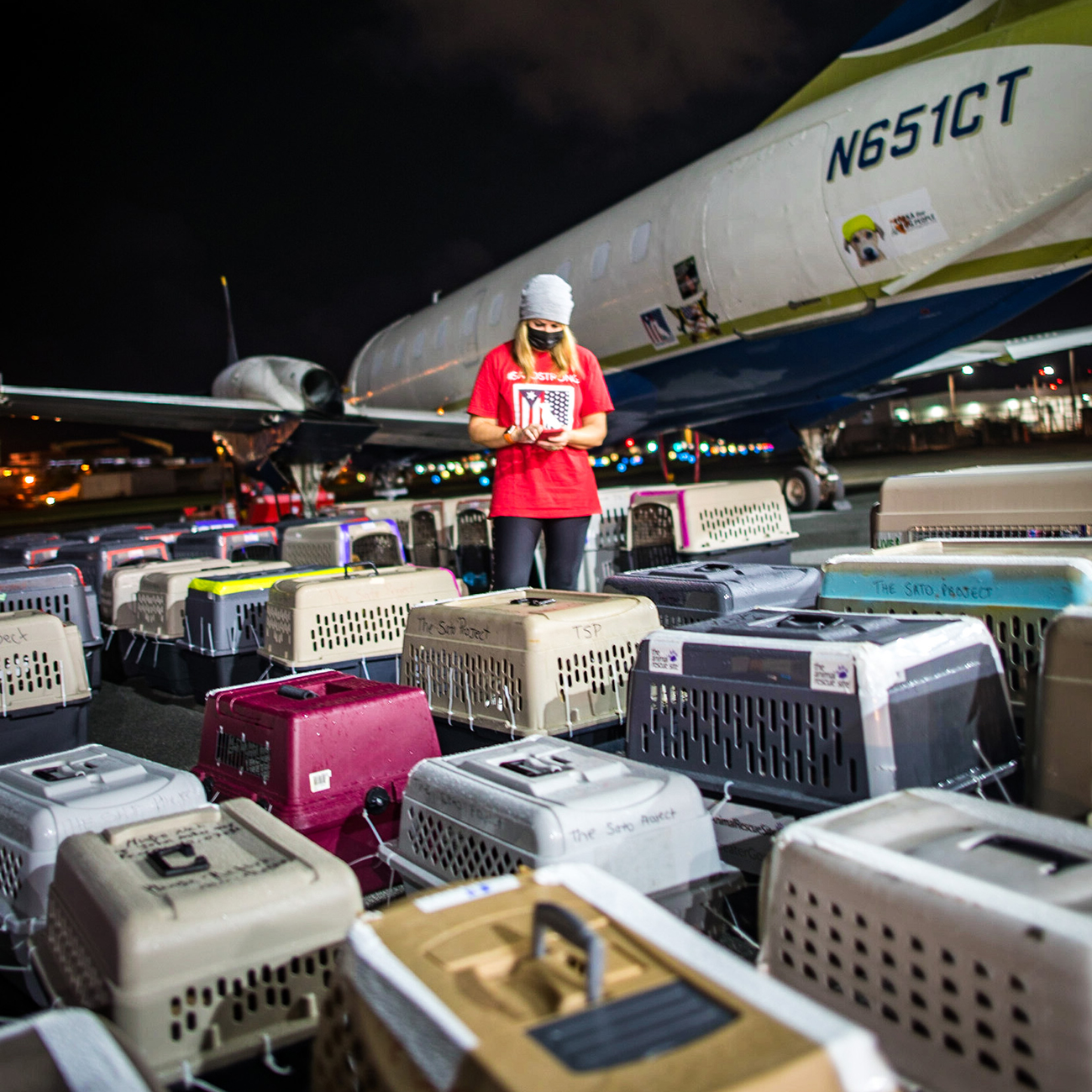 dog rescue at airport checking in hundreds of dogs.