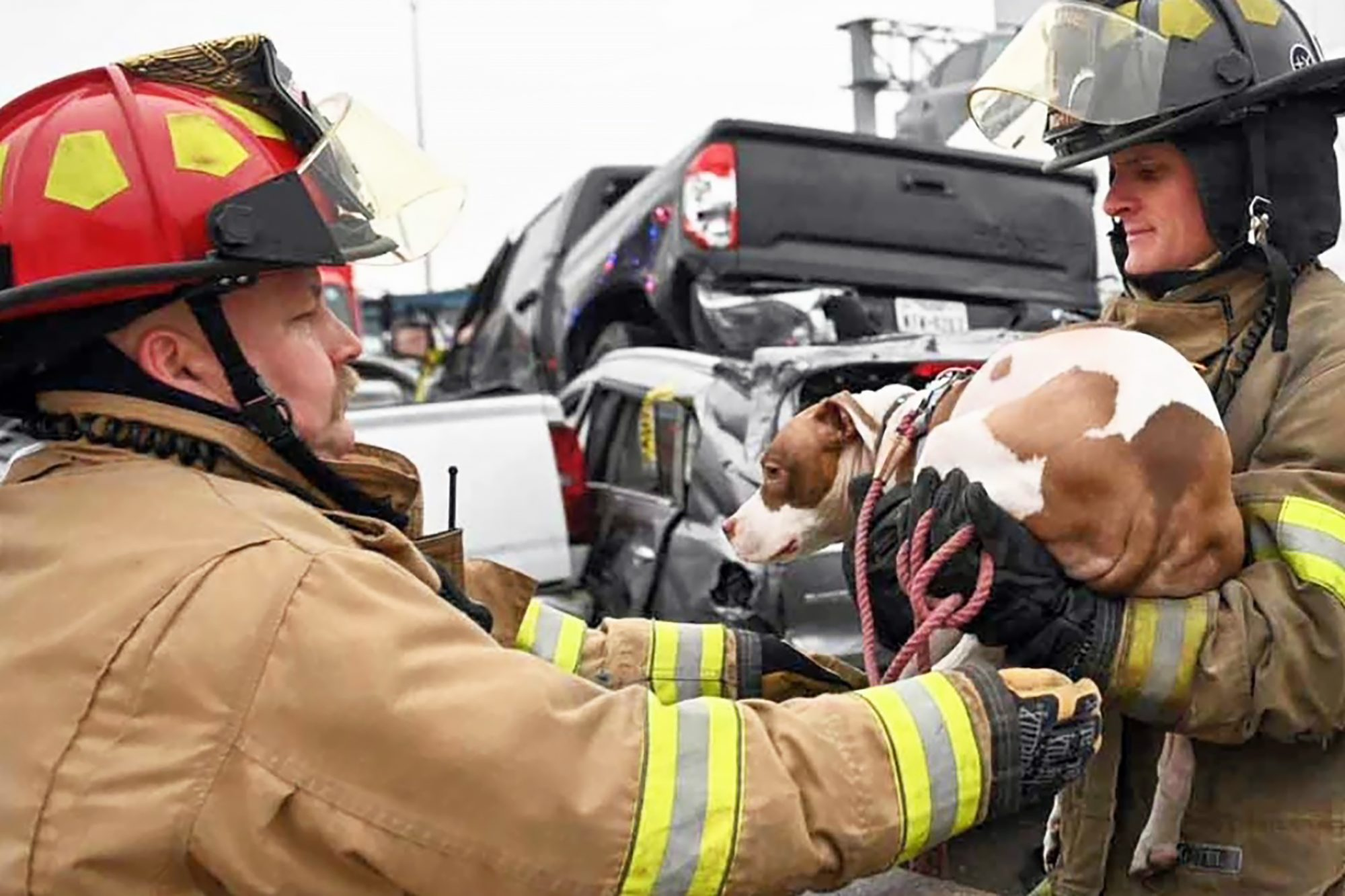 dog rescued by firefighters