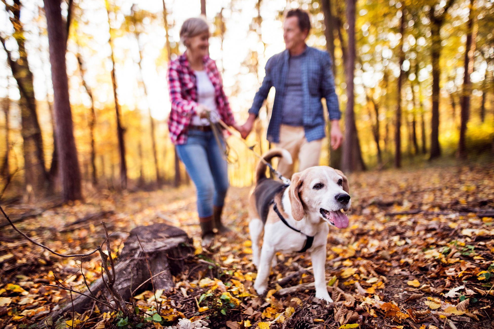 senior couple walking dog in an autumn forest