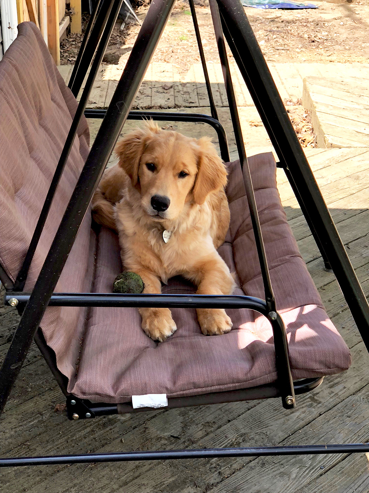 Blonde retriever lays on a porch swing