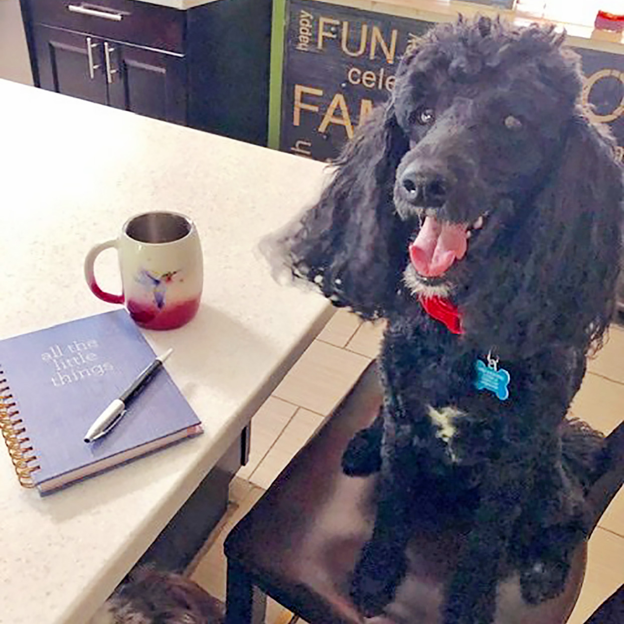 Black poodle sits on barstool next to coffee cup and notebook