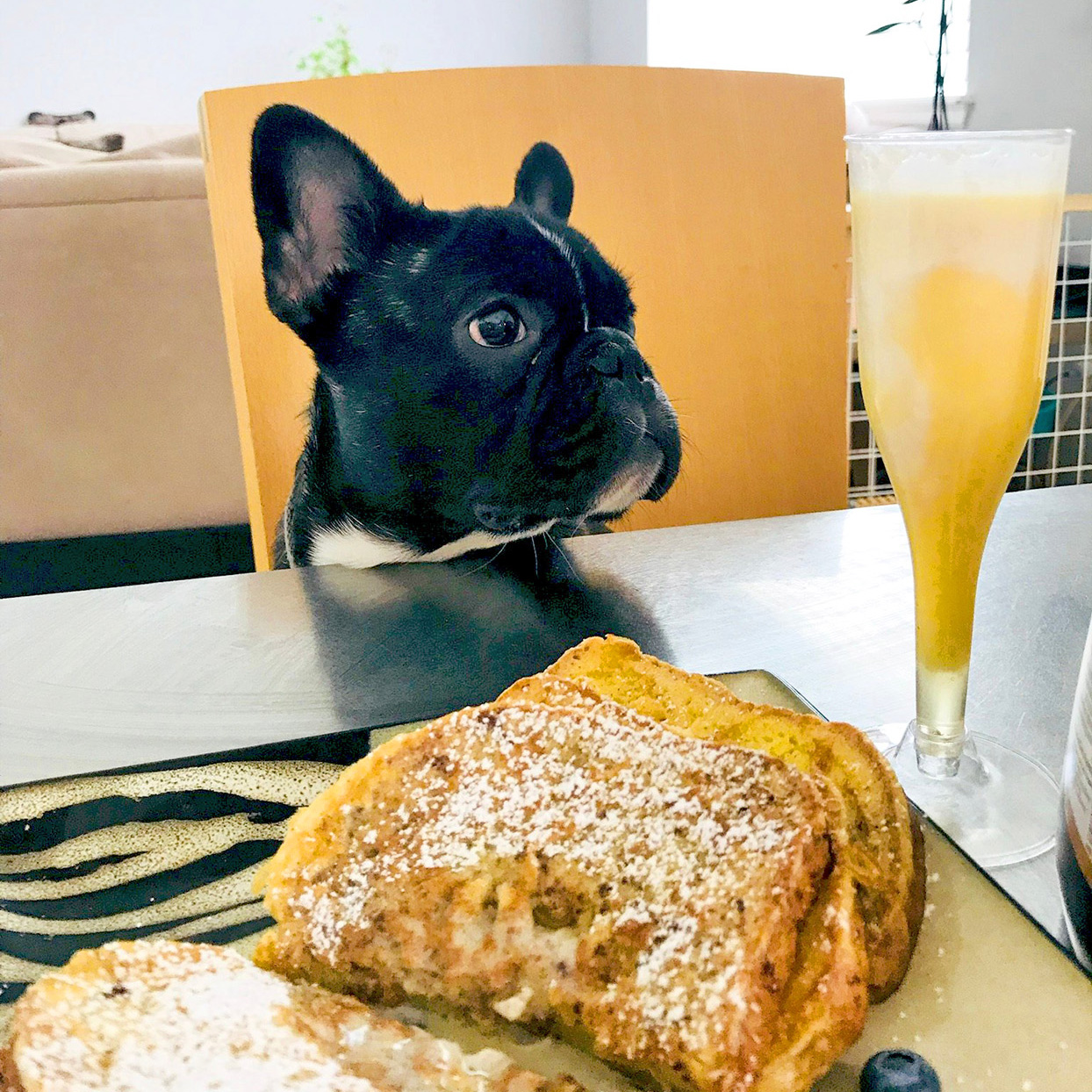 Frenchie dog sits at table in front of pastry and mimosa