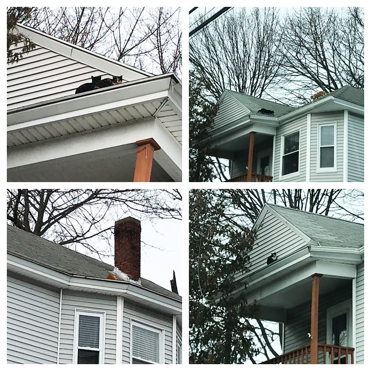 Cats on roof composite