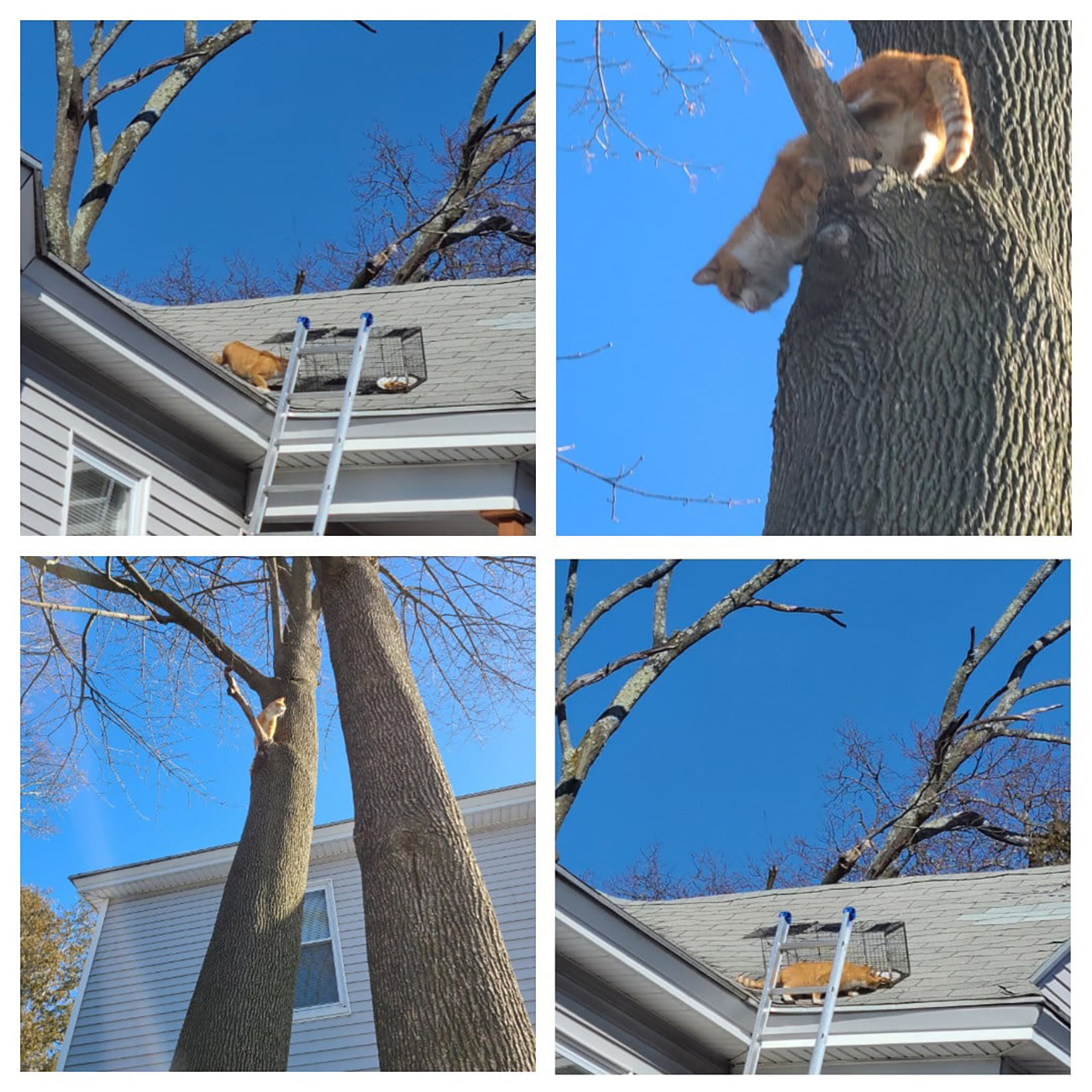 Composite of cat being saved from roof