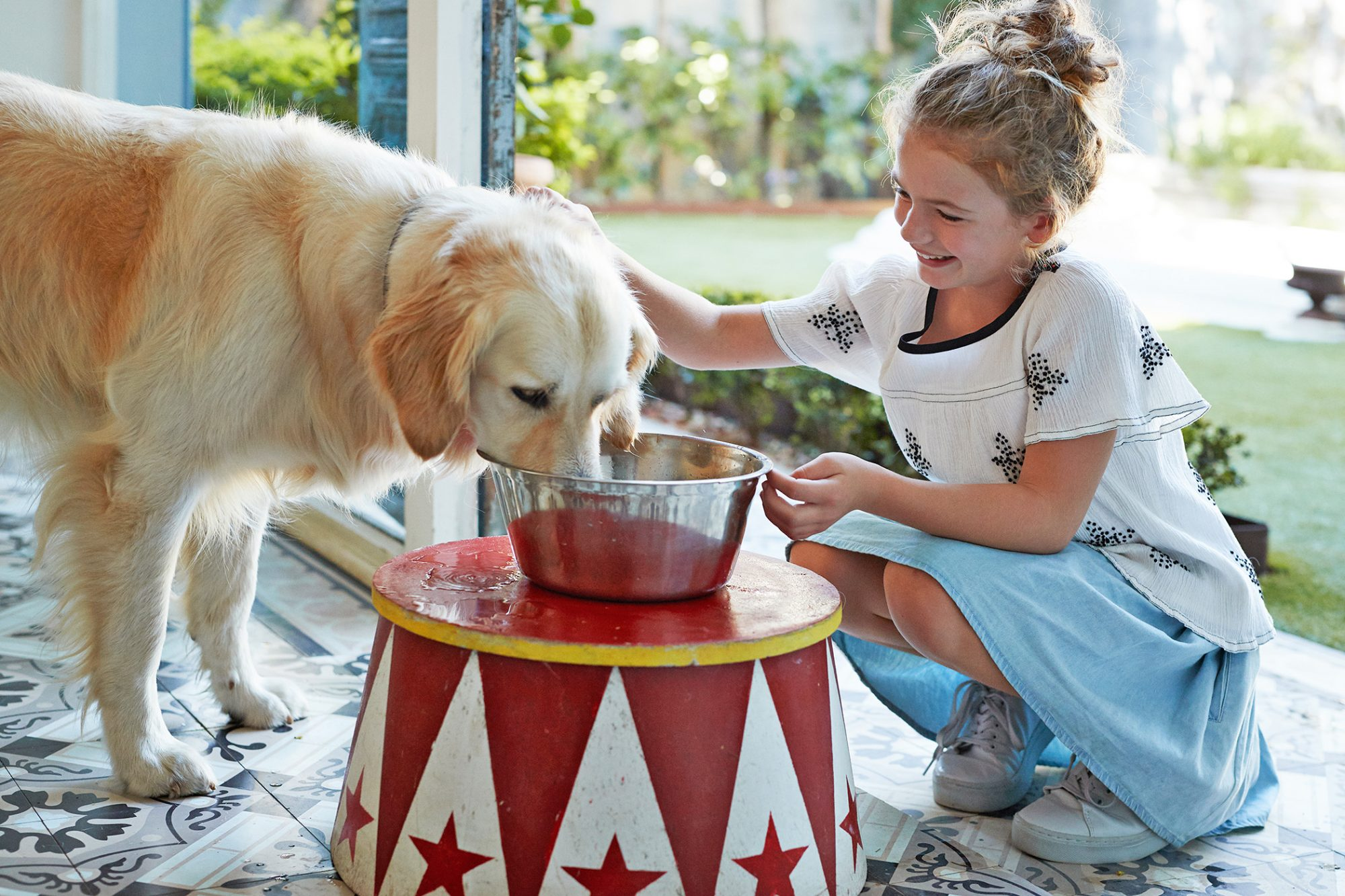 dog drinking from elevated bowl