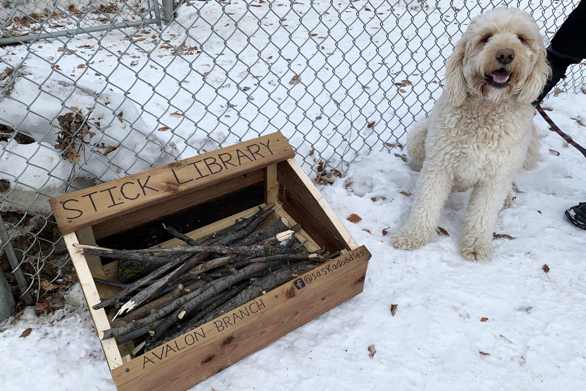 dog with stick library