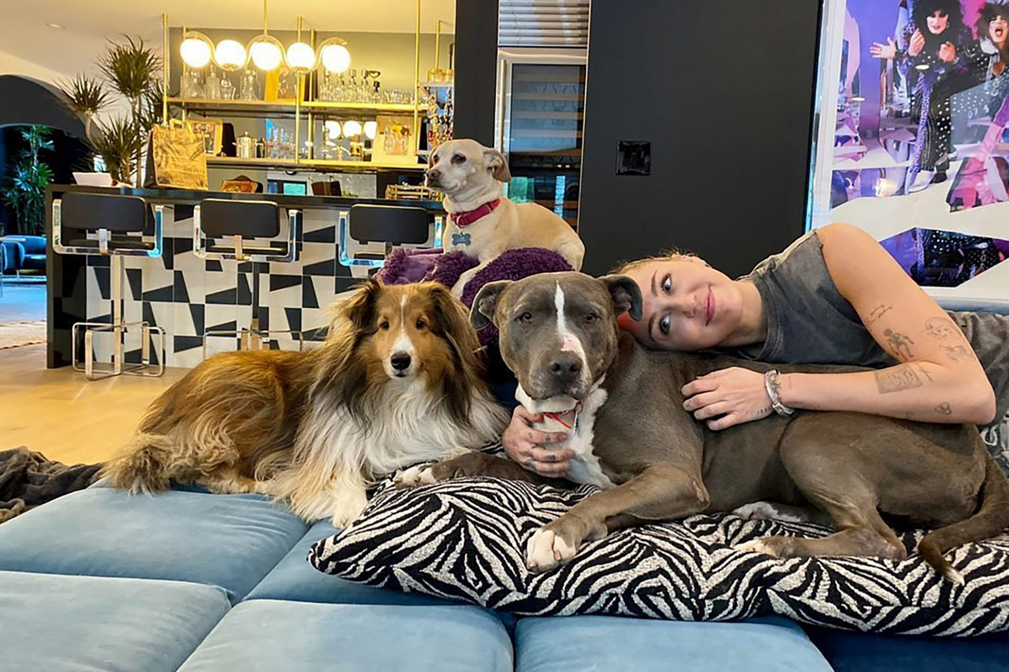 Picture of singer Miley Cyrus cuddling with three dogs on couch in home