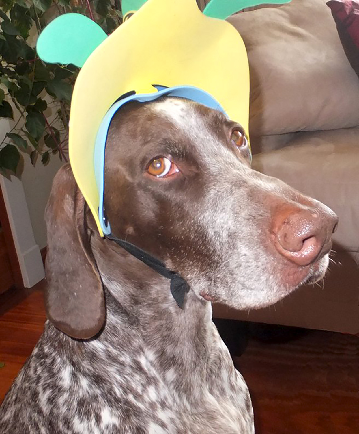 dog with silly hat