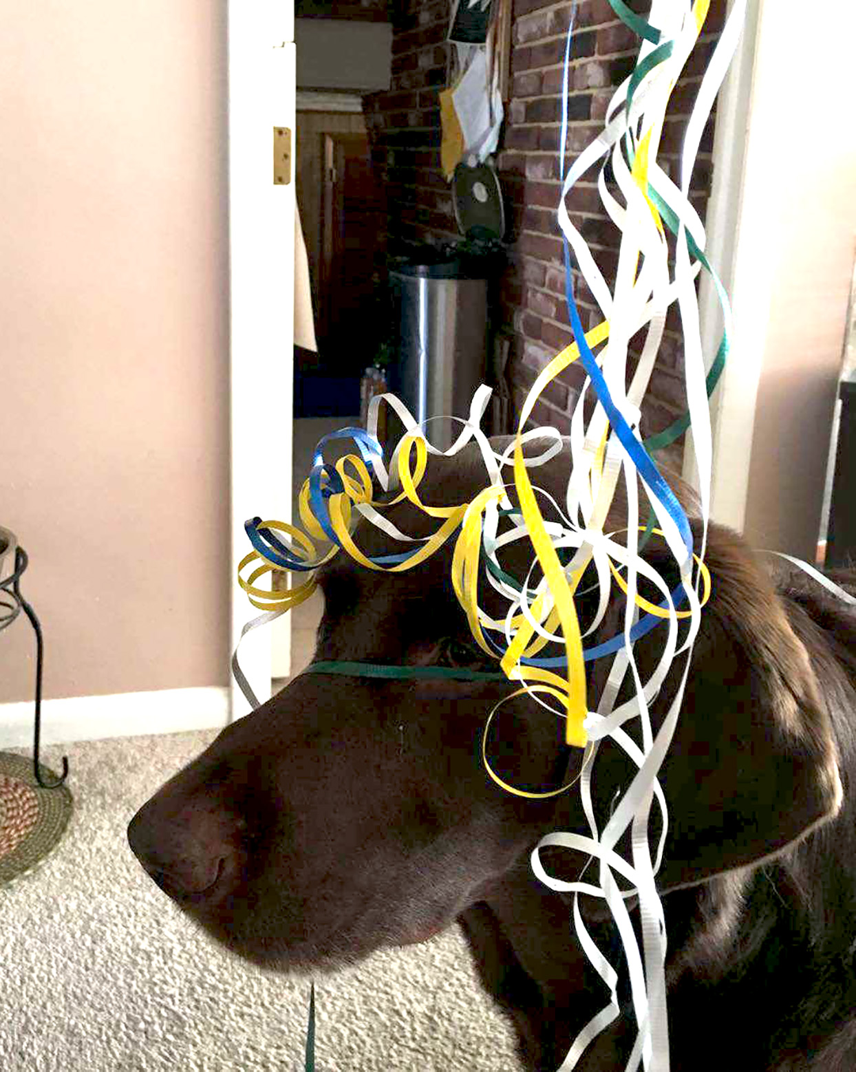 dog with curly ribbons on his head