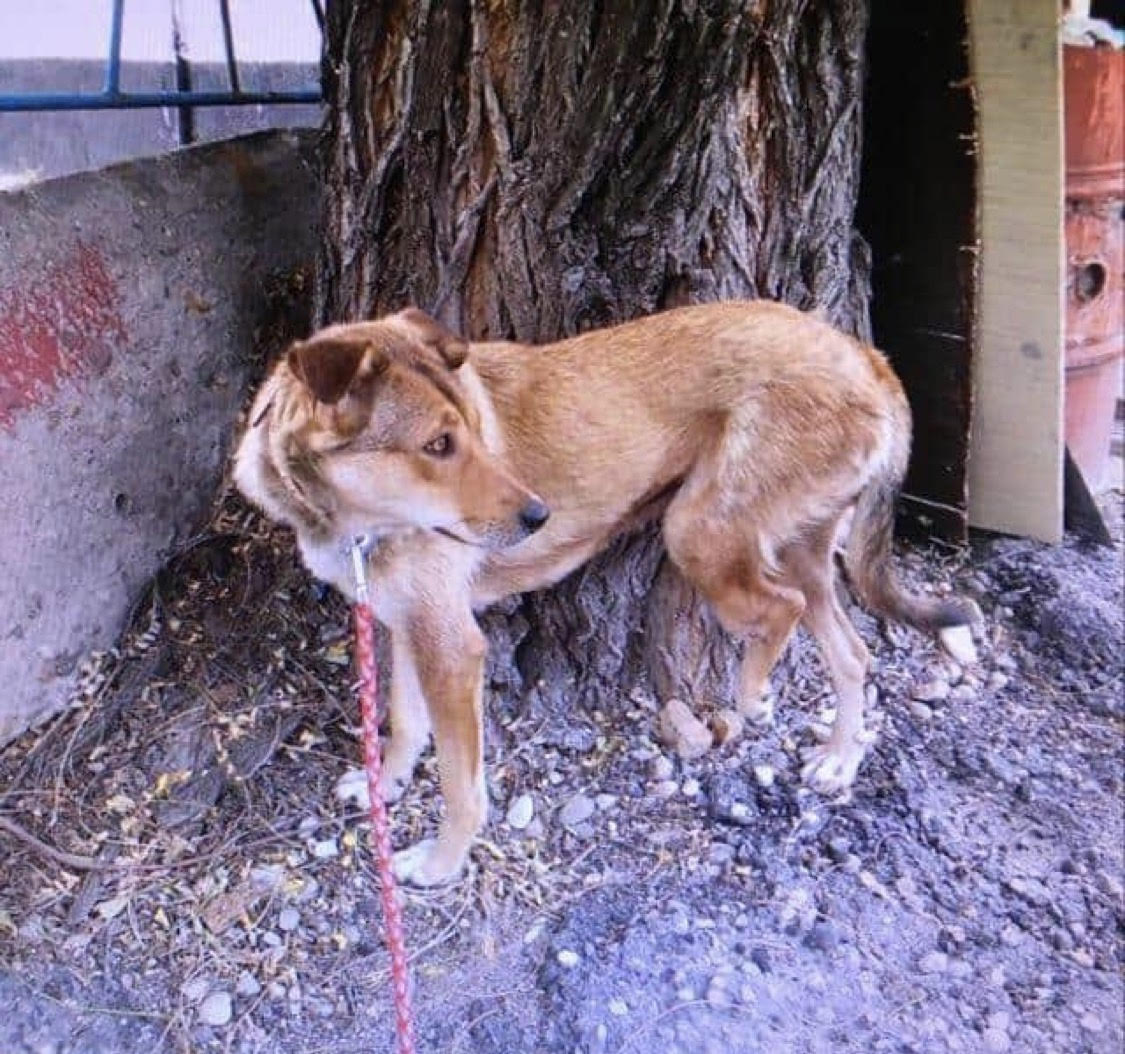 Linda, Dogs on Deployment 2021 mascot, stands by a tree on the street in Bulgaria.