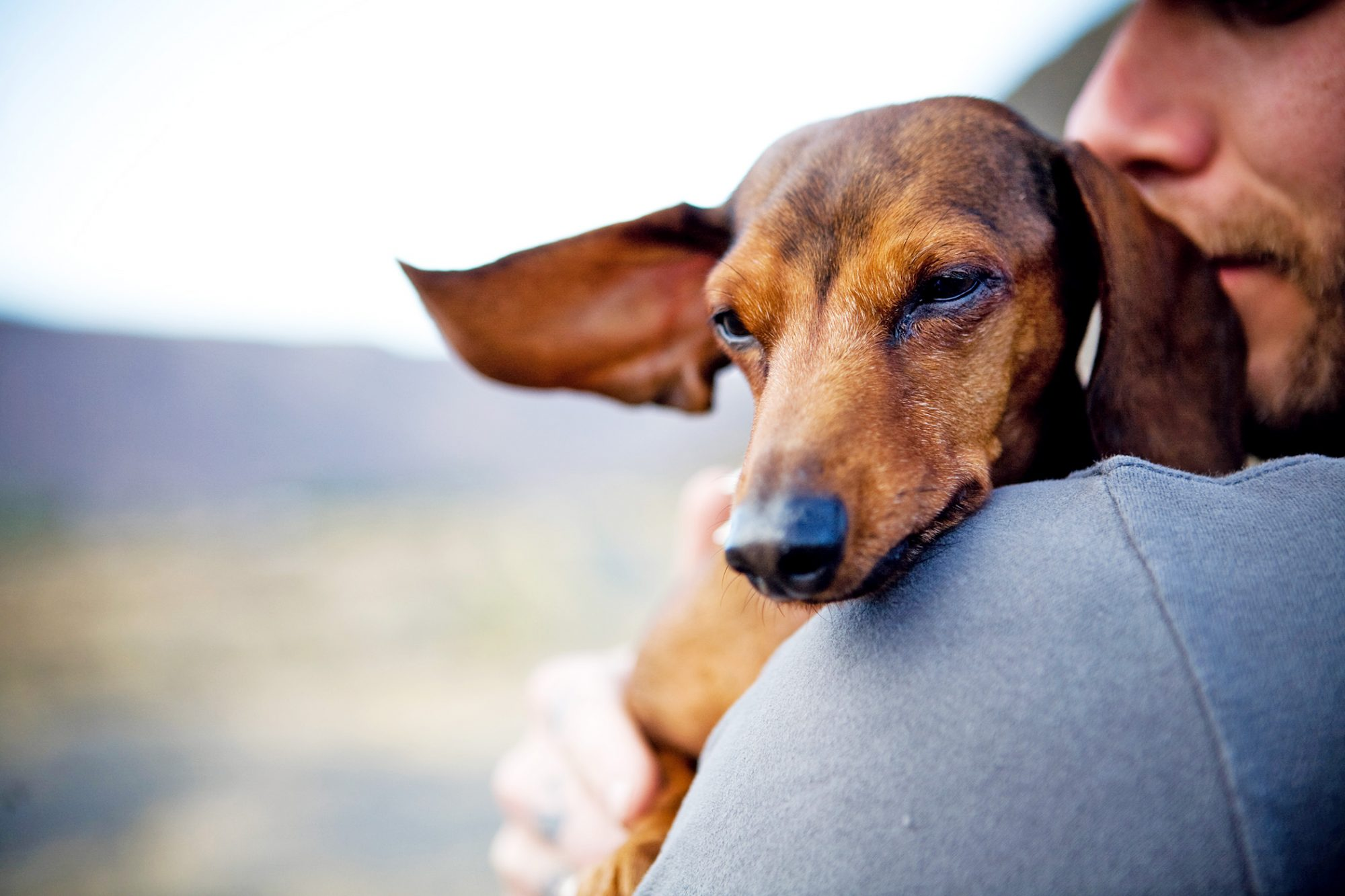 Man holds dachshund and cuddles them against his shoulder