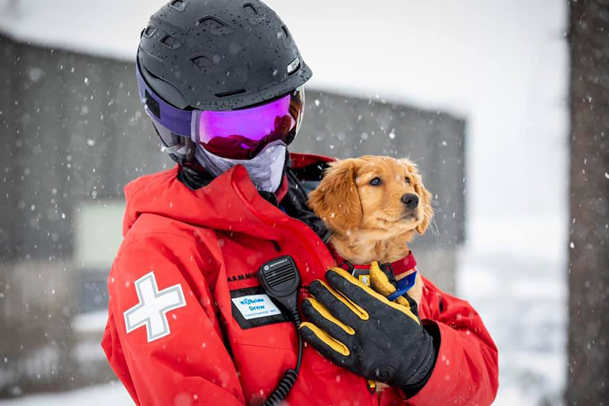 Shasta, the avalanche rescue dog, tucked in a person's coat