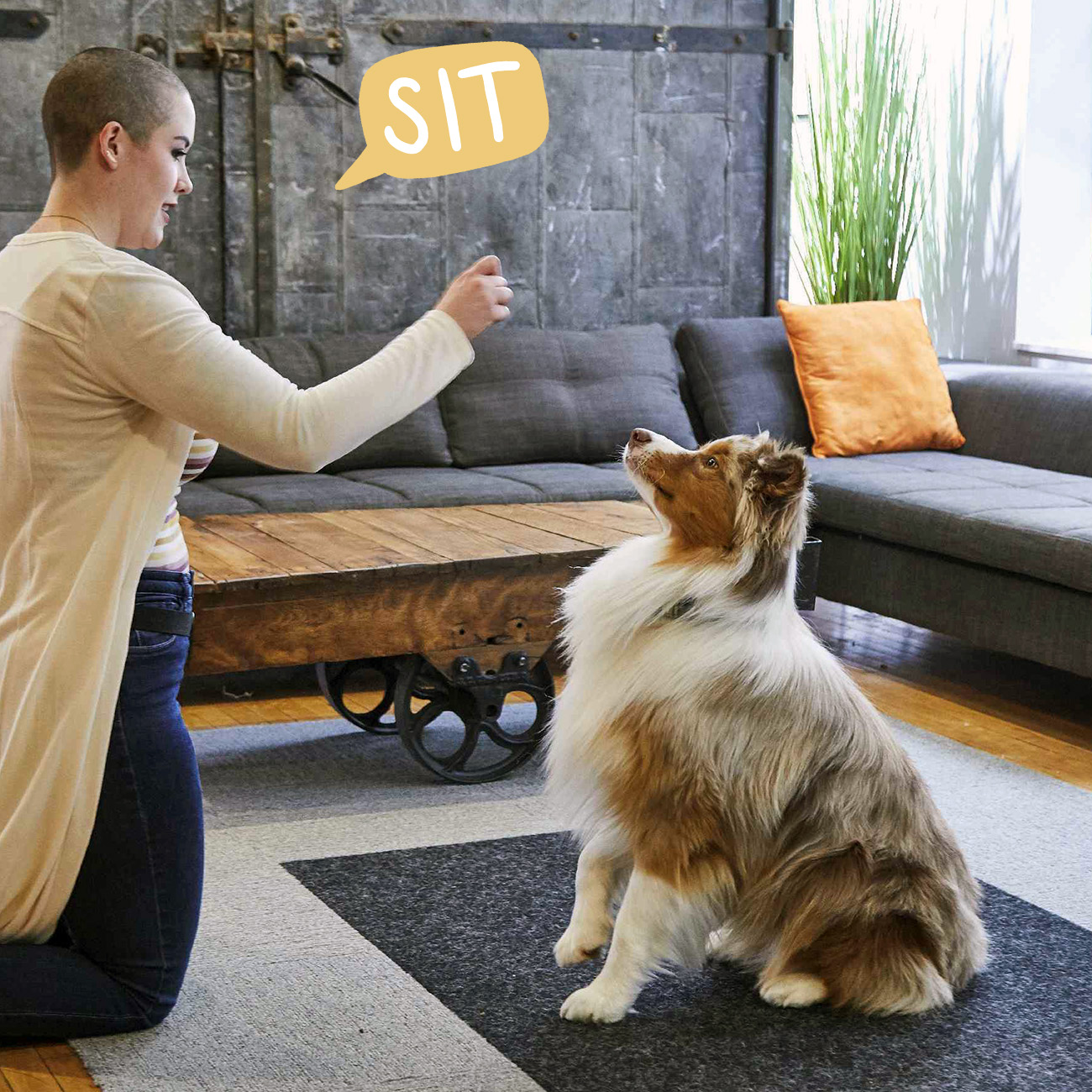sit cure in speech bubble with dog sitting