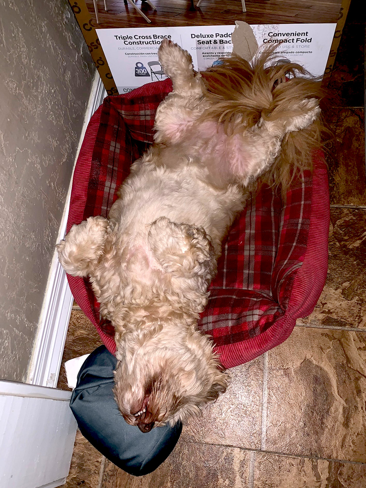 dog laying on his back in a plaid dog bed