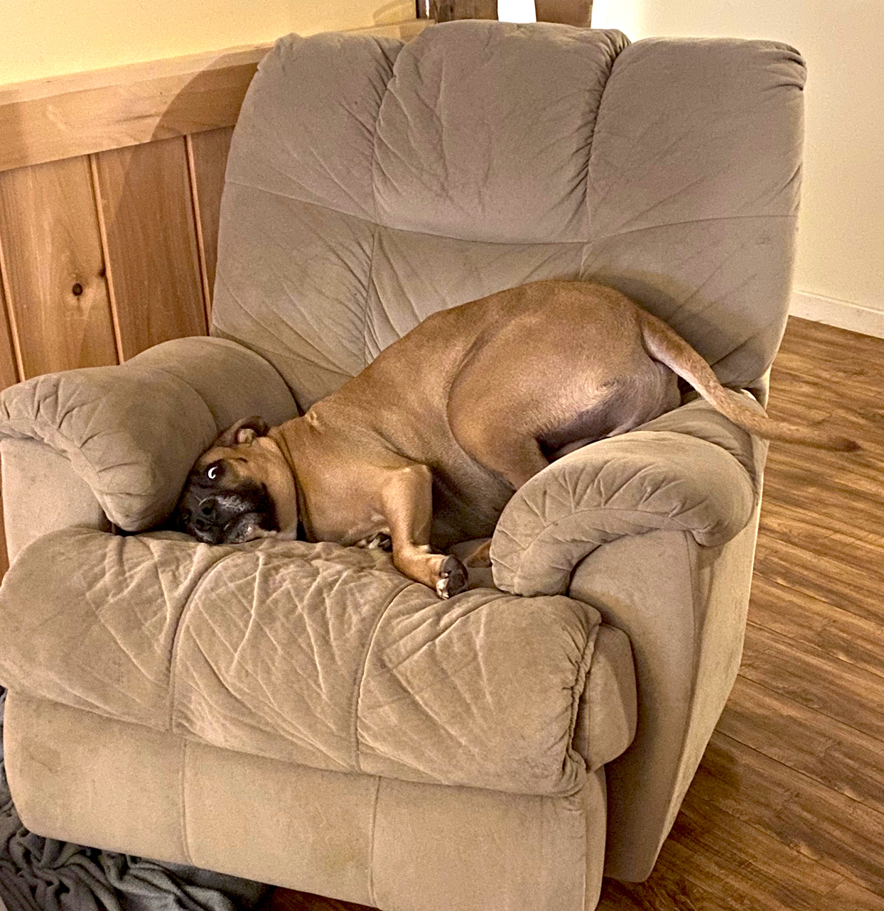 dog laying on recliner