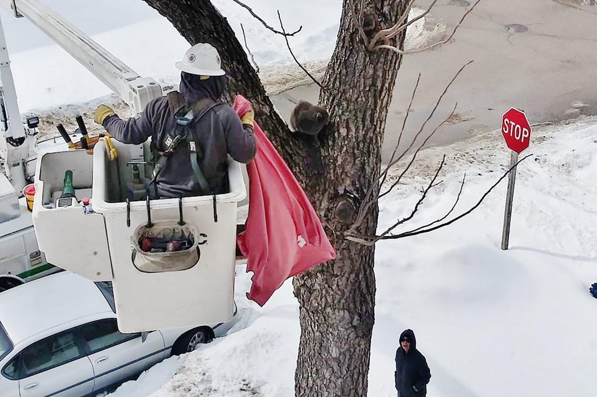 Picture of rescue worker saving cat from a tree during winter