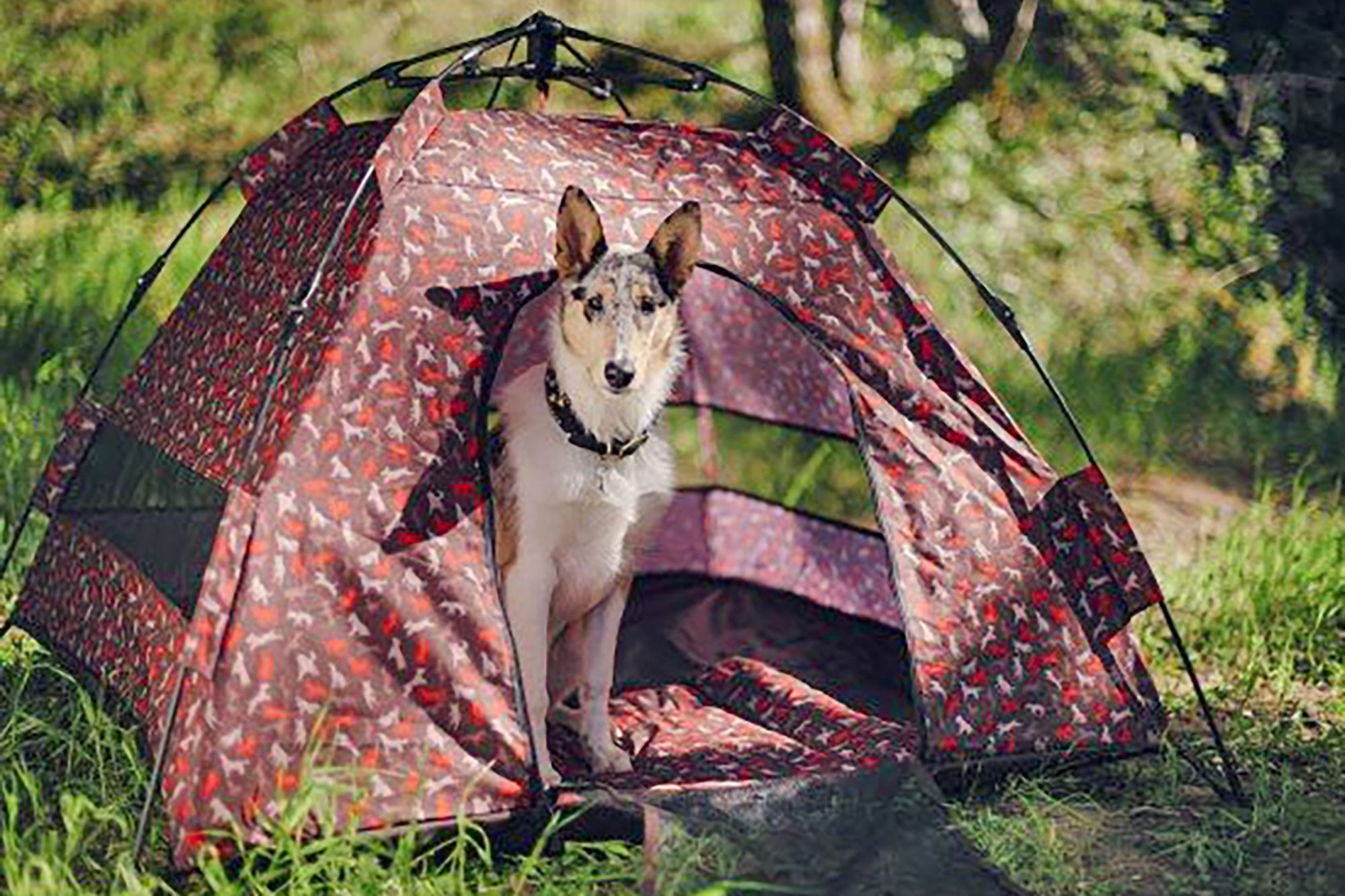 Tall dog stands inside dog tent with red dog pattern