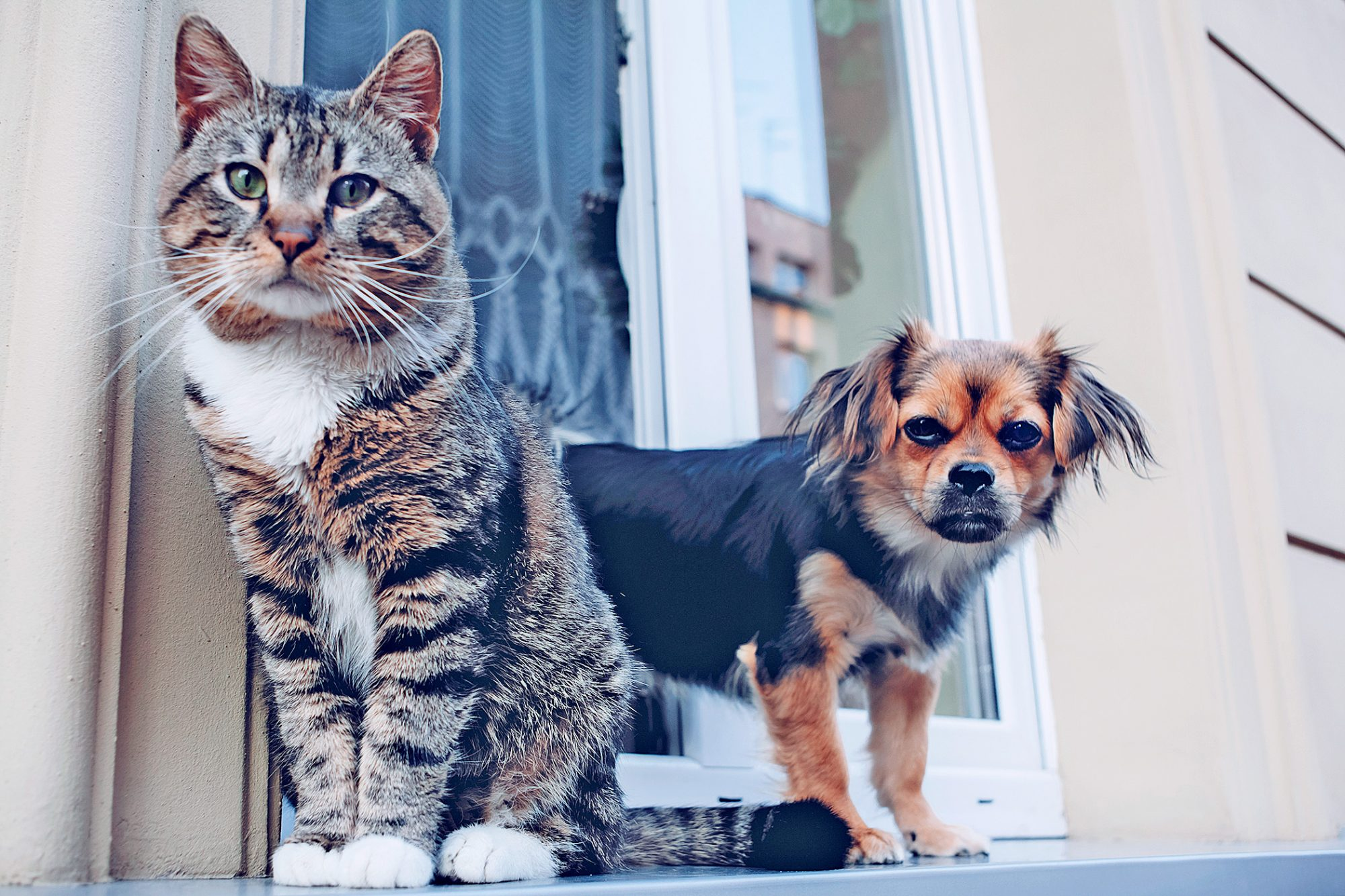 cat and dog at the door outside