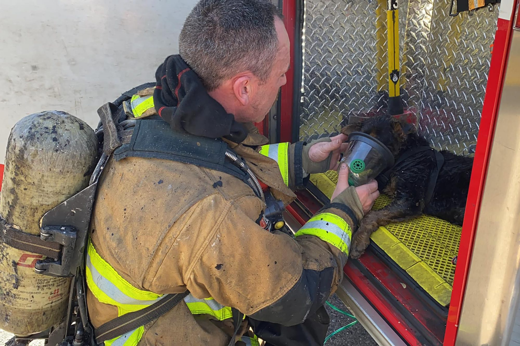 fireman giving oxygen to dog