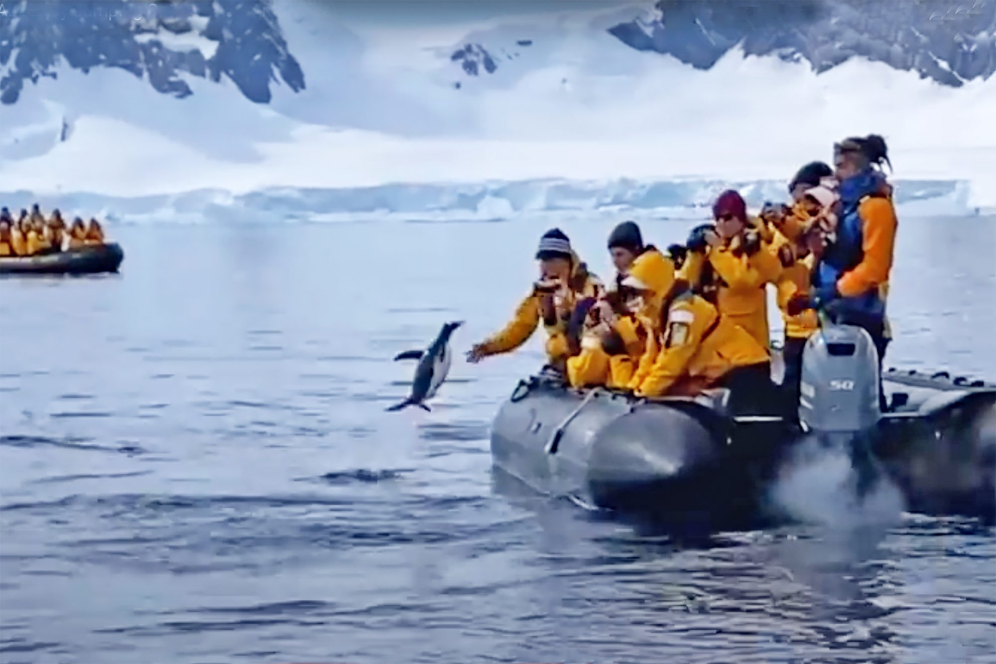 boat rescuing a penguin