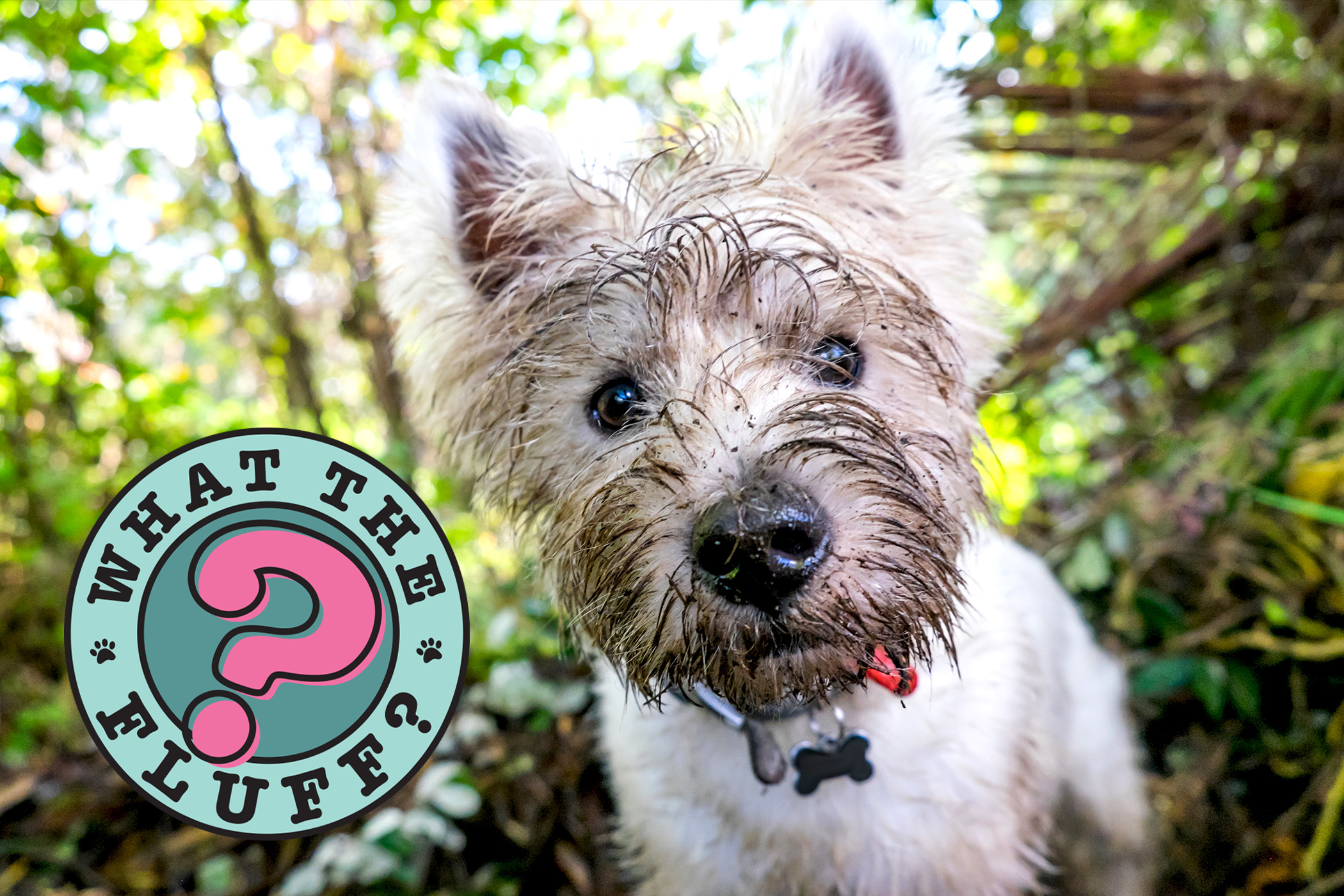 White terrier close-up with mud-covered face next to What the Fluff logo