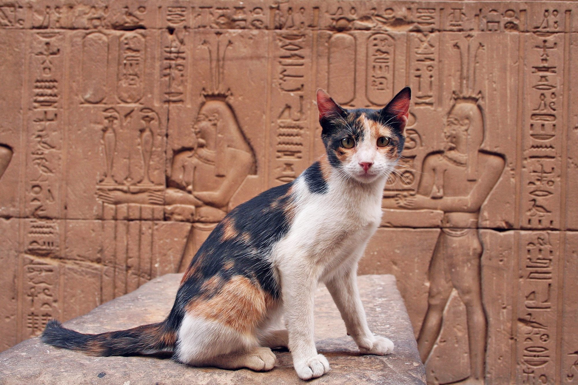 cat at Egyptian temple