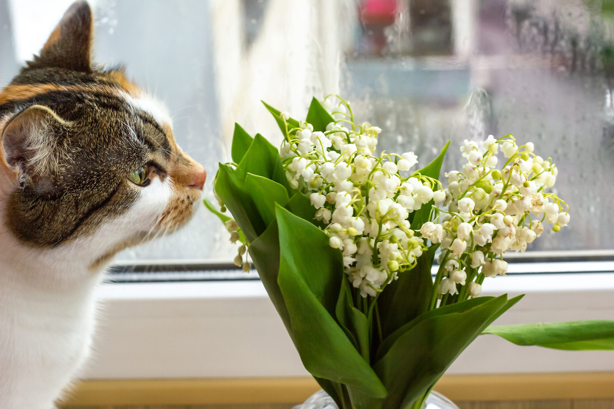Calico cat sniffs bouquet of flowers