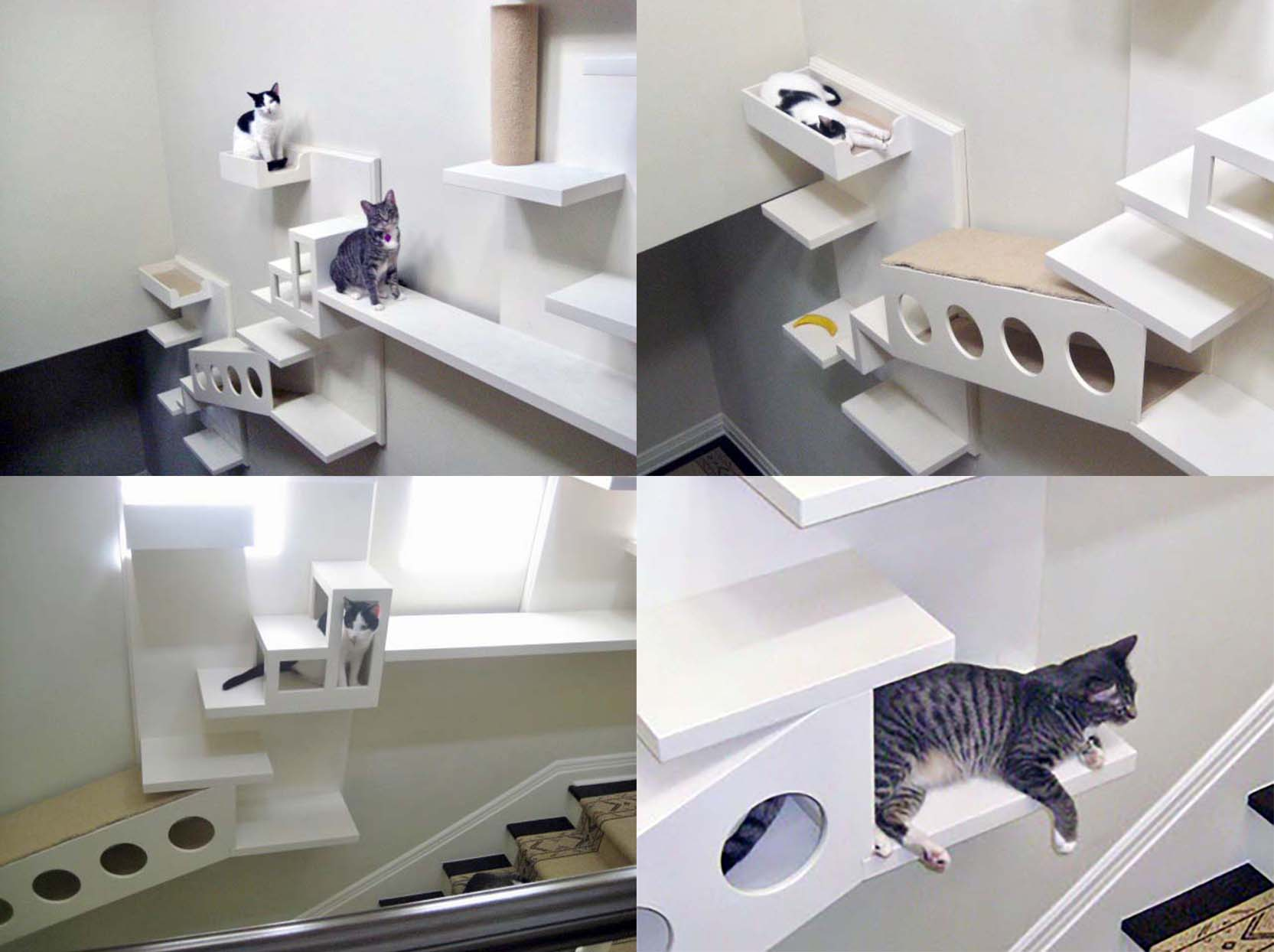 Composite of Yeardley Smith's cat stairs