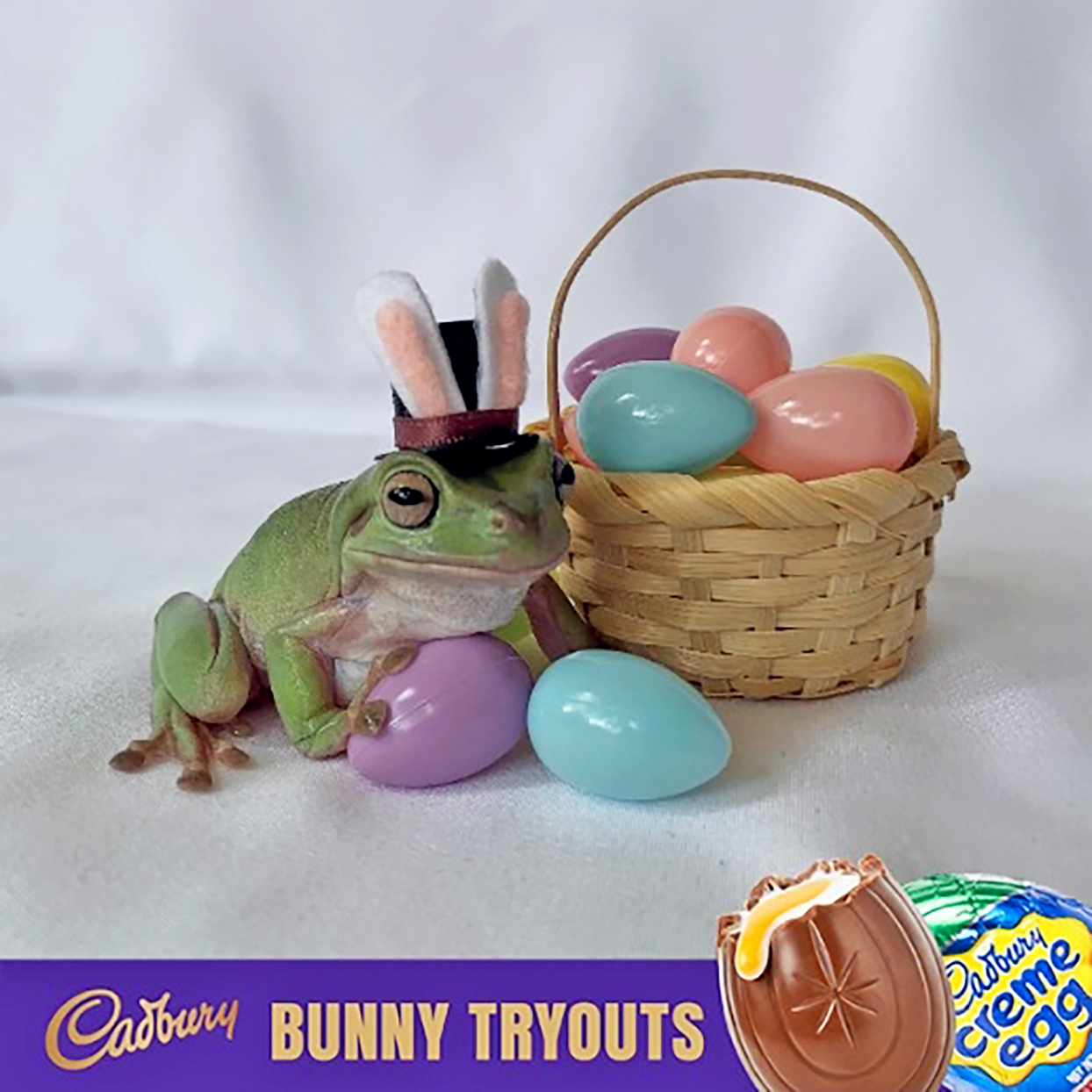 Frog poses with plastic Easter eggs for Cadbury ad
