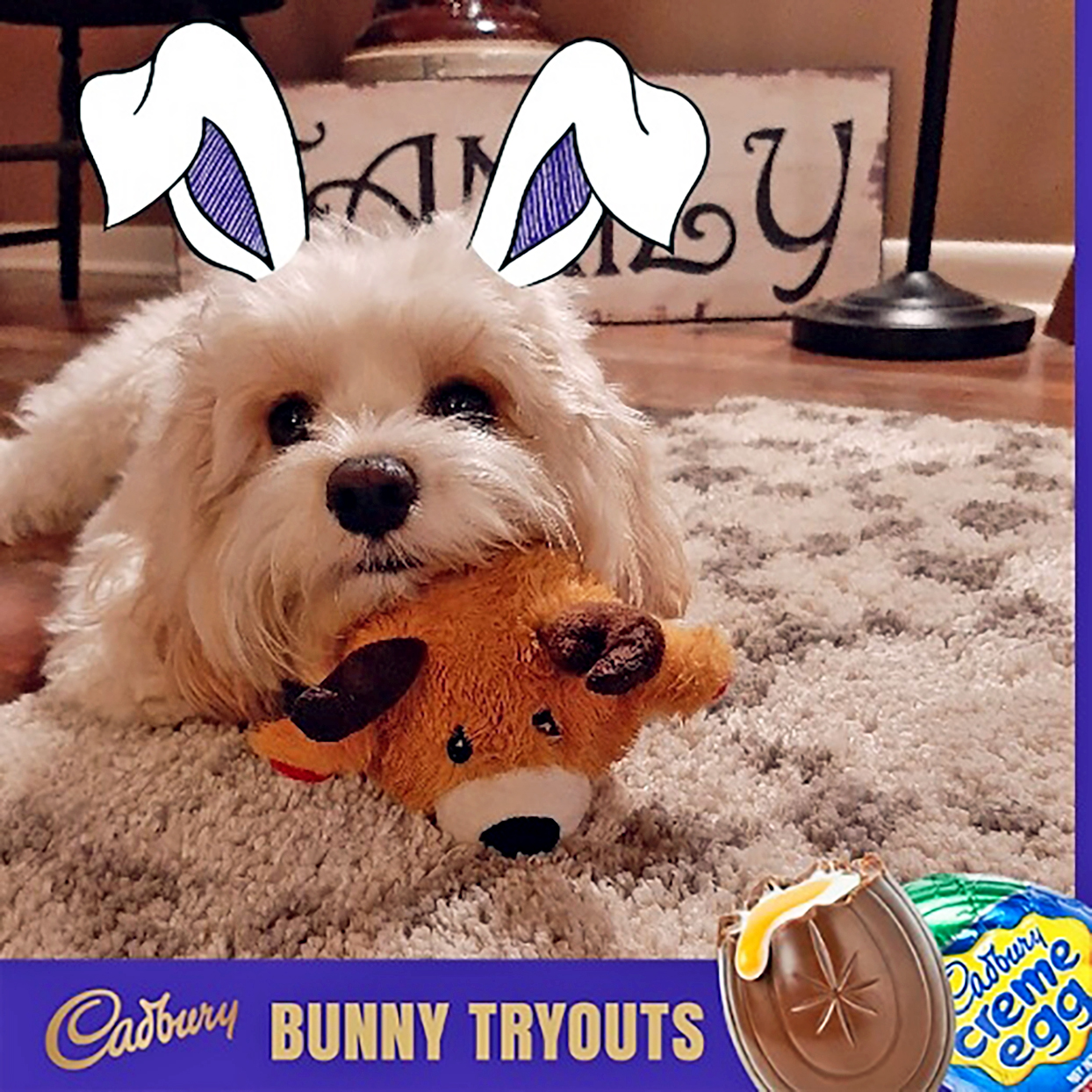 White dog wearing bunny ears plays with toy in Cadbury ad