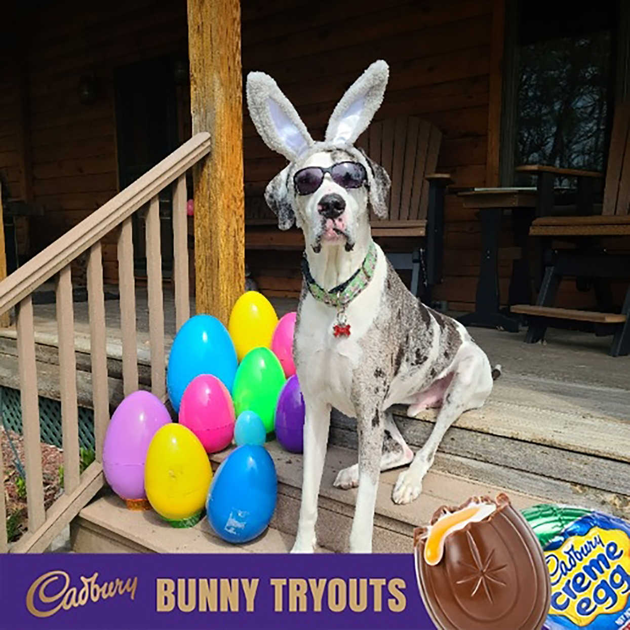 large spotted dog wears bunny ears next to large Easter eggs for Cadbury ad