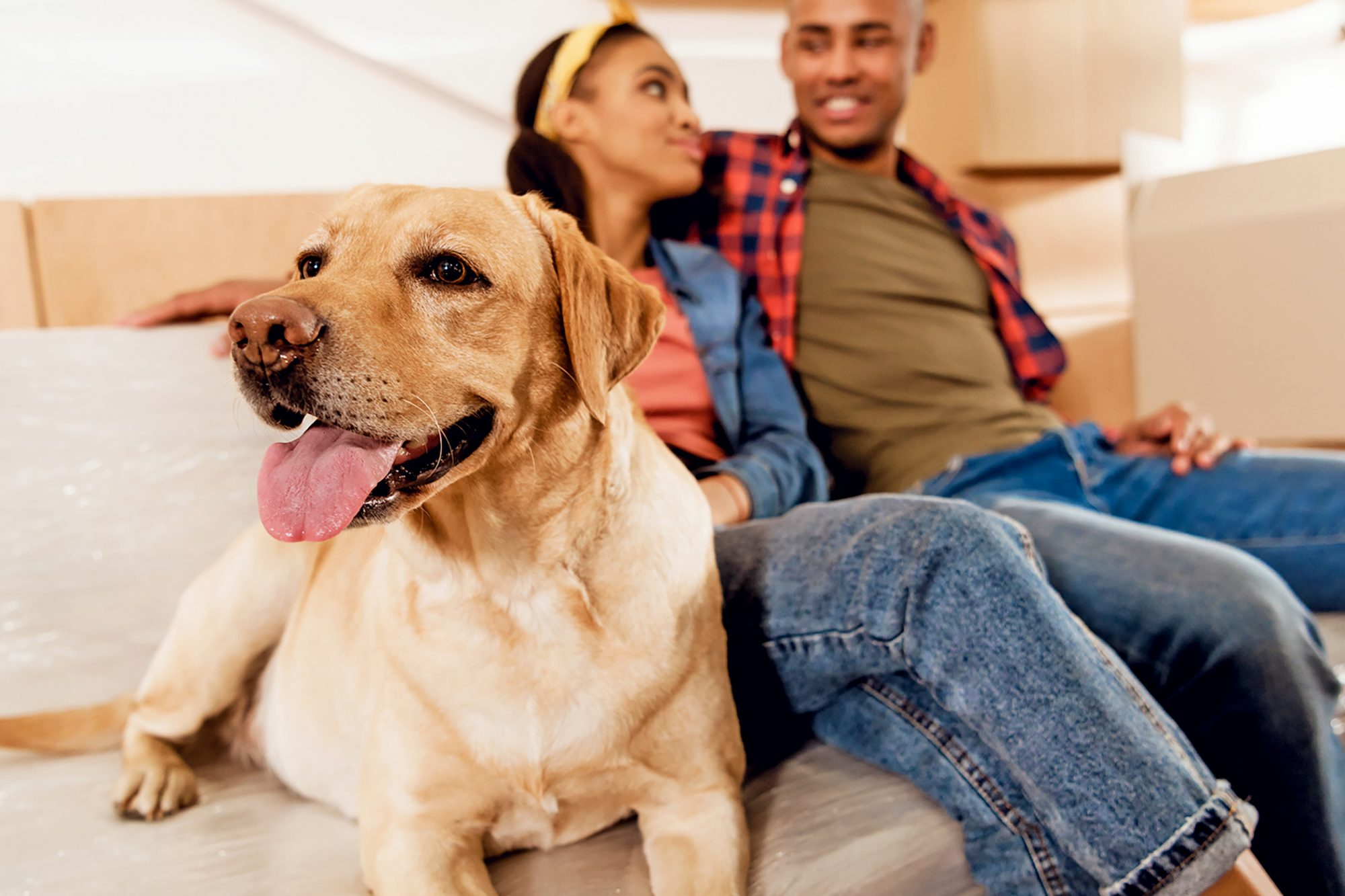 young Black couple with yellow labrador dog resting on sofa