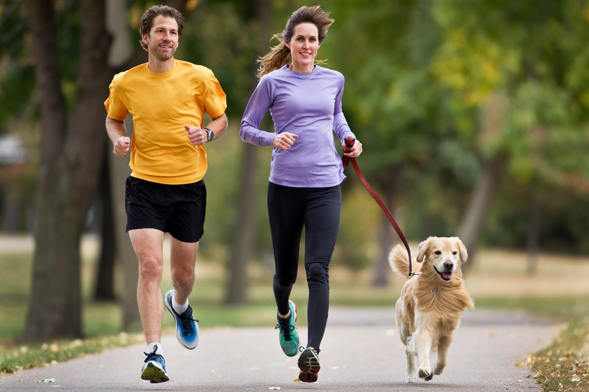 Joggers and Golden Retriever Running on a Paved Trail